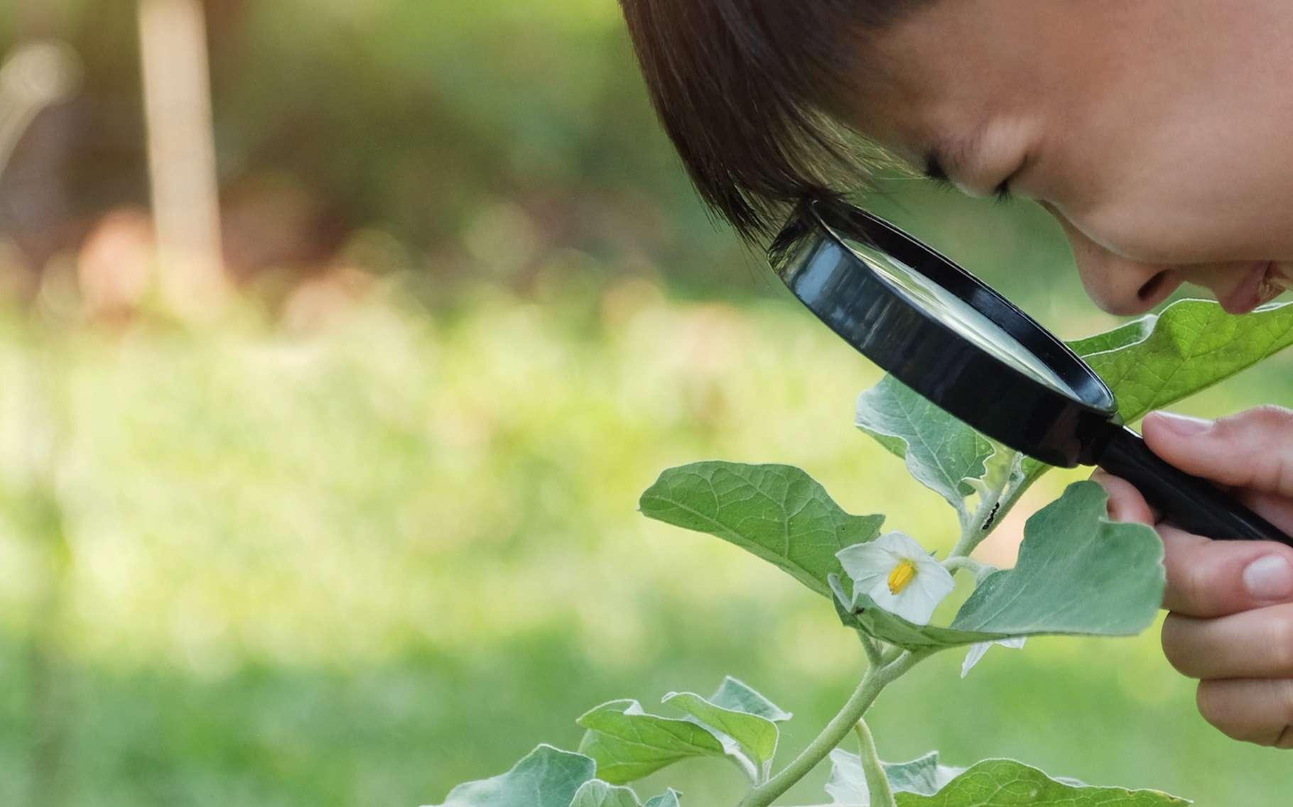 Partir pour une balade à la découverte des plantes sauvages d'une région. Une idée de vacances aux couleurs scientifiques valable même pour les petits budgets puisque, un peu partout en France, des associations locales œuvrent ainsi pour la valorisation du territoire qu'elles animent. © sewcream, Fotolia