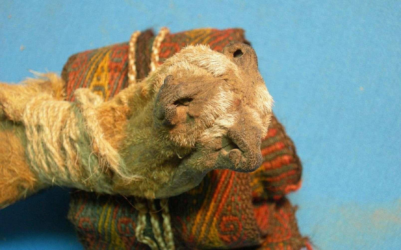 Des chercheurs ont trouvé dans les Andes un sac en cuir vieux de 1.000 ans. © Jose Capriles, Penn State