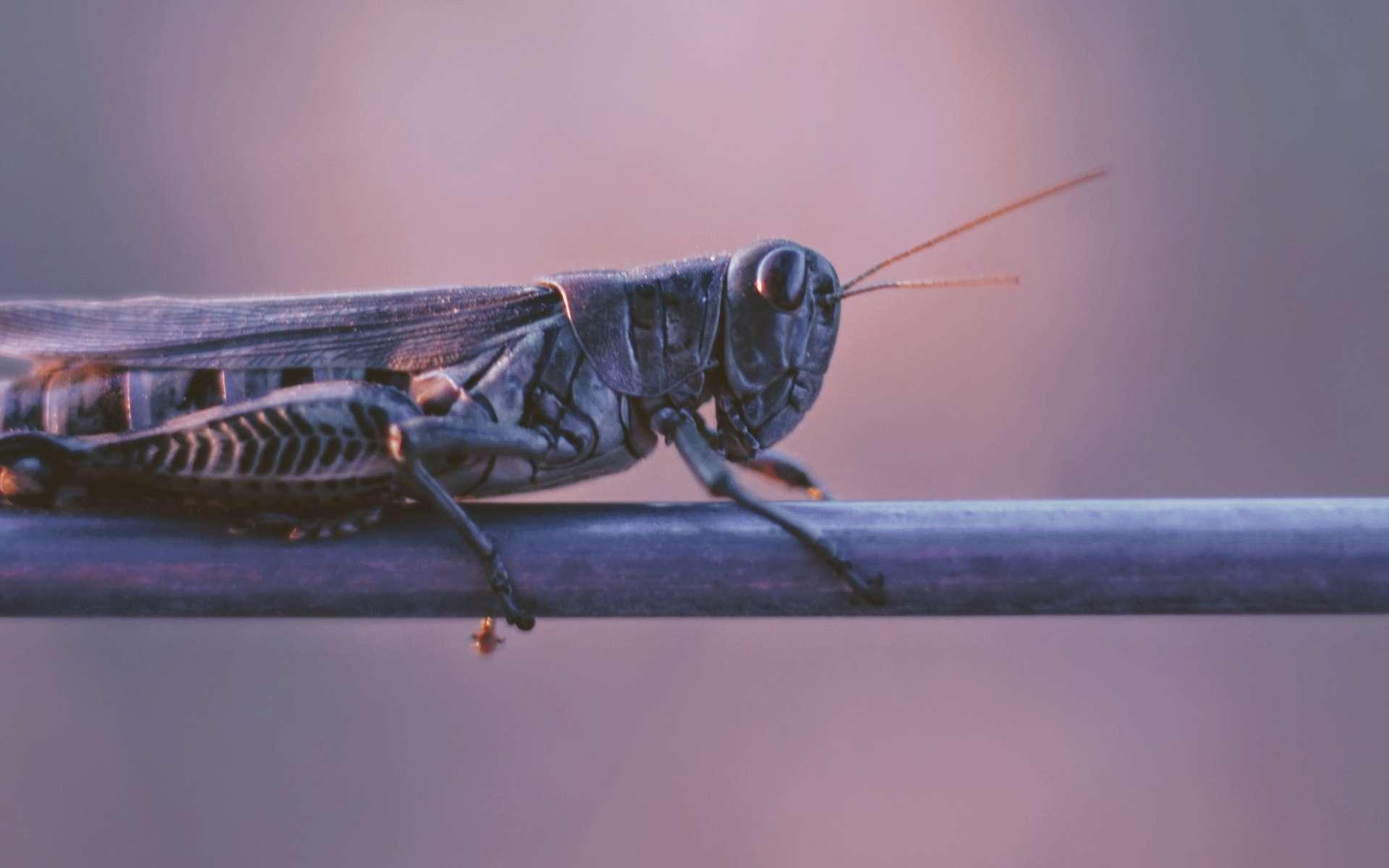 Le réchauffement climatique va rendre les insectes plus nombreux et plus voraces. © Joshua Hoehne, Unsplash