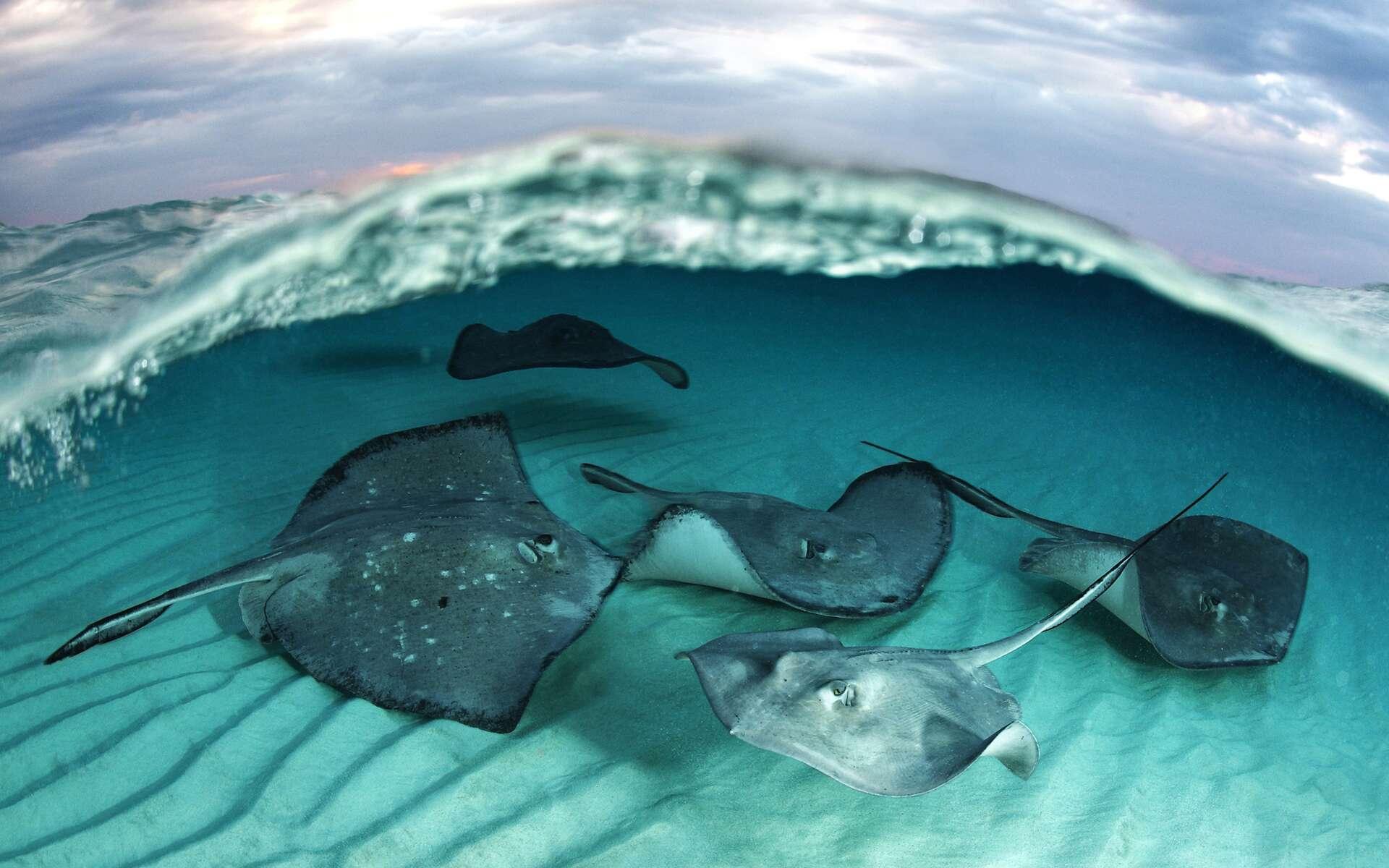 Sous la couverture, des trésors et des mystères... L'image a valu à son auteur, Davide Vezzaro, une médaille d'or à l'issue de l'édition 2012 du Festival mondial de l'image sous-marine. © Davide Vezzaro