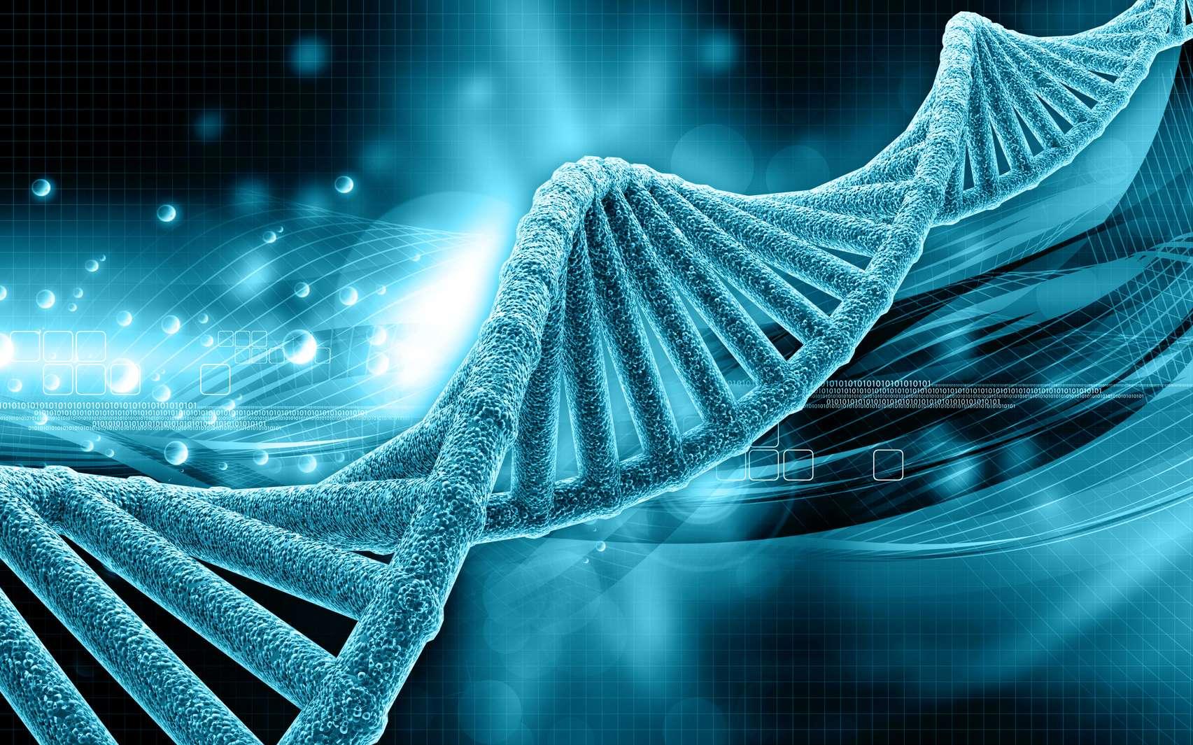 L'ADN porte les gènes qui codent pour les caractères héréditaires. © abhijith3747, Fotolia