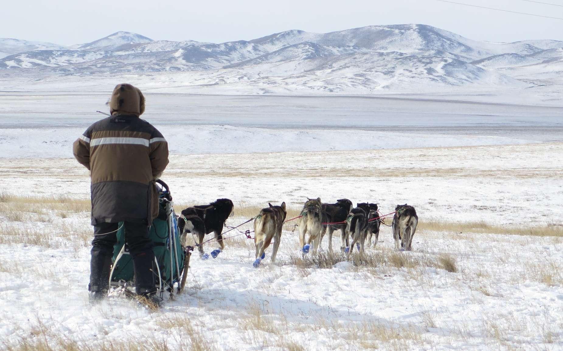 L'Odyssée sauvage est parvenue en Mongolie, « une mer d'herbe et de neige ». © Taïga