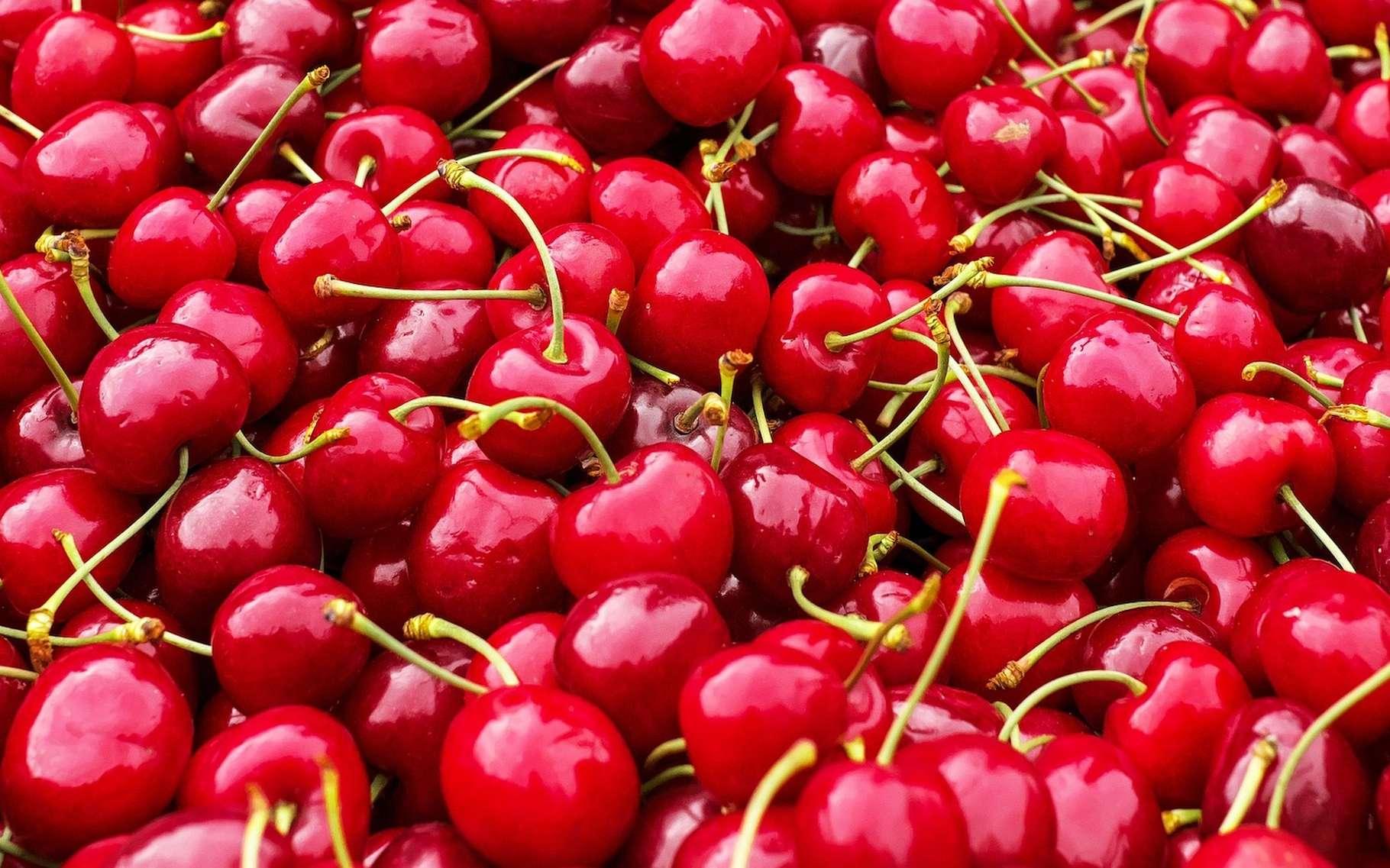 La cerise est le 16e fruit le plus consommé en France. Entre 2012 et 2017, 89 % des échantillons analysés en moyenne contenaient des traces de pesticides et 5,2 % dépassaient même la limite maximale en résidus autorisée par l'Europe. © Couleur, Pixabay License