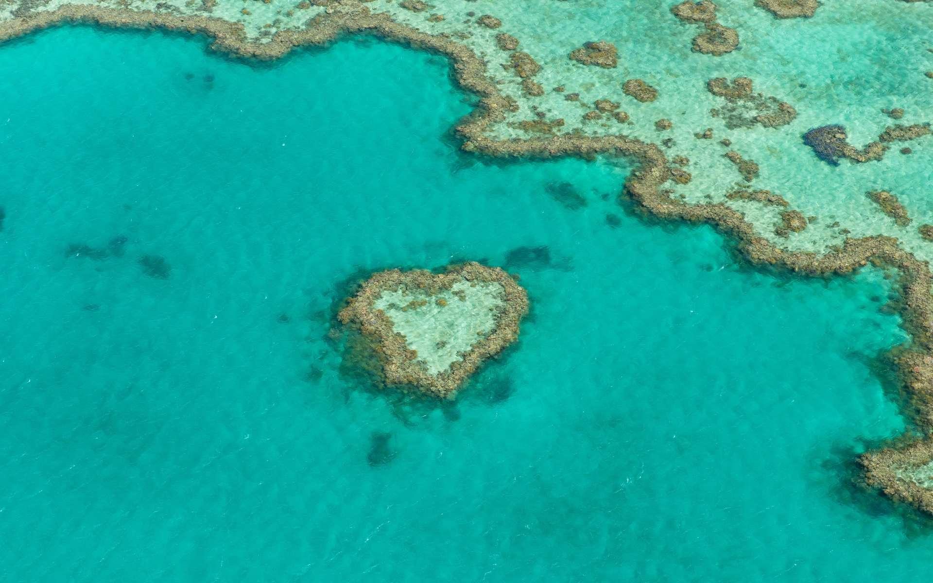 La Grande Barrière de corail, au large de l'Australie, est le plus grand récif corallien au monde. © Tomas Sykora, Shutterstock