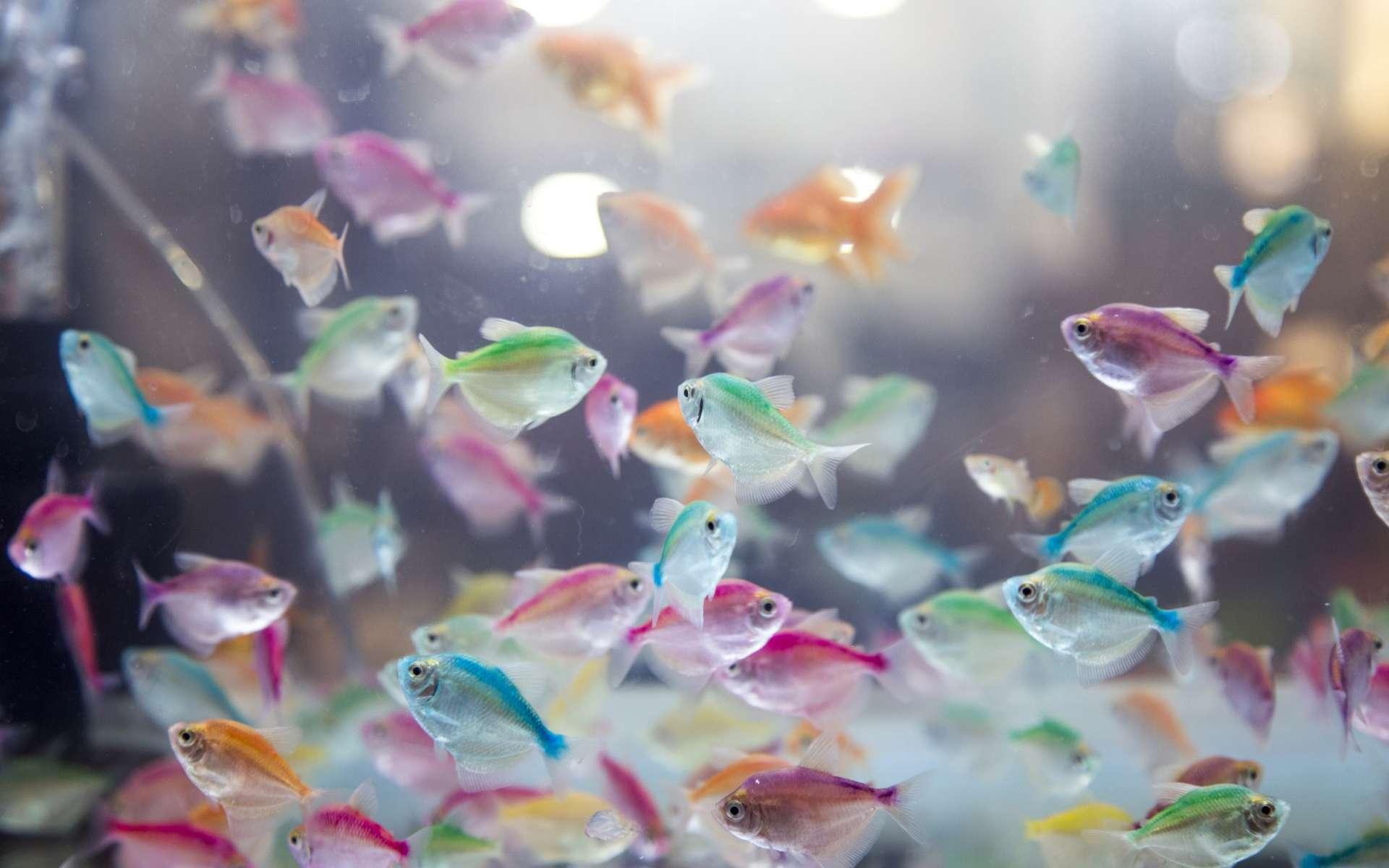 Quel est le plus petit poisson vivant au monde ? © yanukit raiva/EyeEm, Adobe Stock
