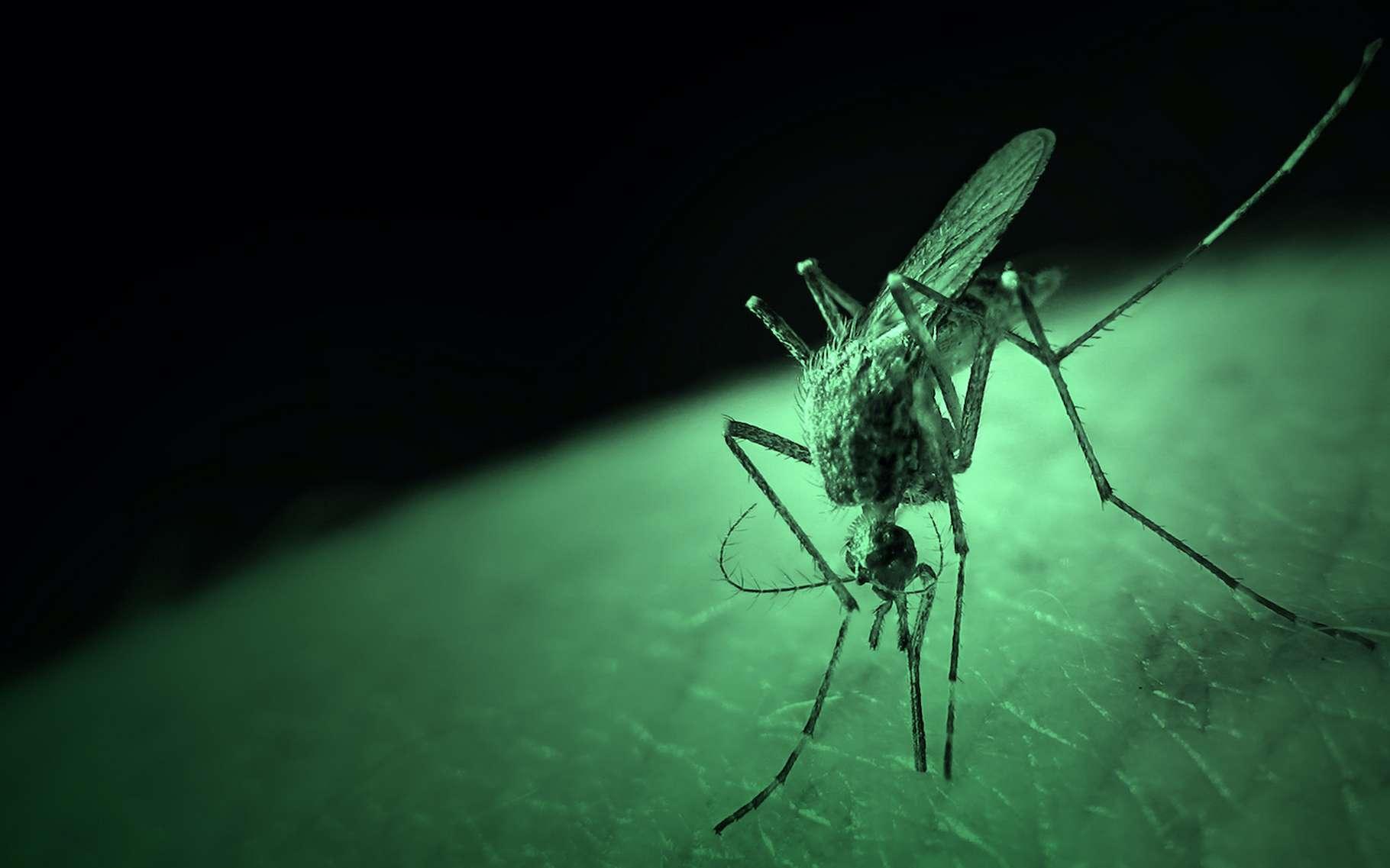 Des chercheurs de l'université de Californie à Irvine (États-Unis) montrent que les moustiques sont spécifiquement attirés ou repoussés par certaines couleurs en fonction de leur espèce et du moment de la journée. © Gregor Buir, Adobe Stock