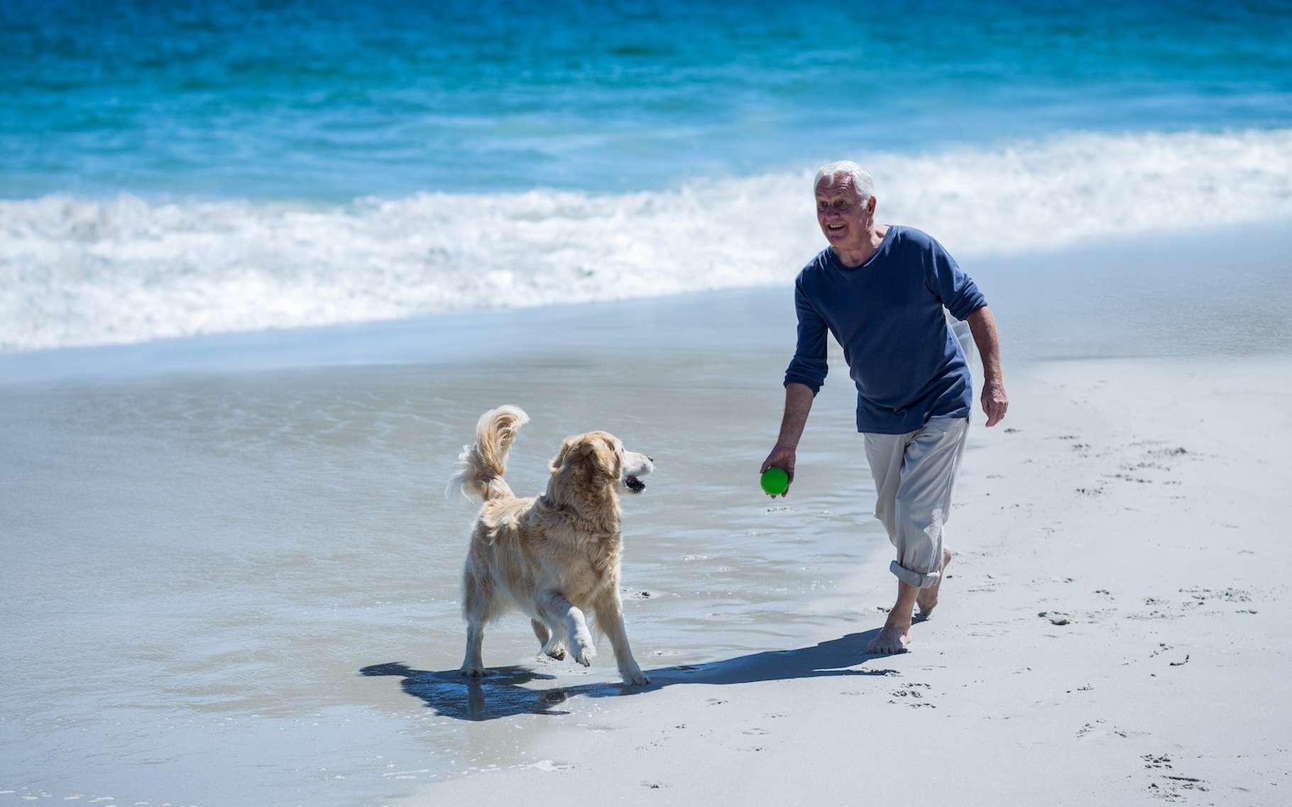 L'amour du chien est inconditionnel, a-t-on l'habitude de dire. Mais, attention parce que si vous mentez à votre chien — au moment de lui lancer sa balle qu'il aime tant, par exemple —, il finira par le comprendre. Et il pourrait alors bien perdre confiance en vous. Pas si bête, le chien… © WavebreakMediaMicro, Adobe Stock
