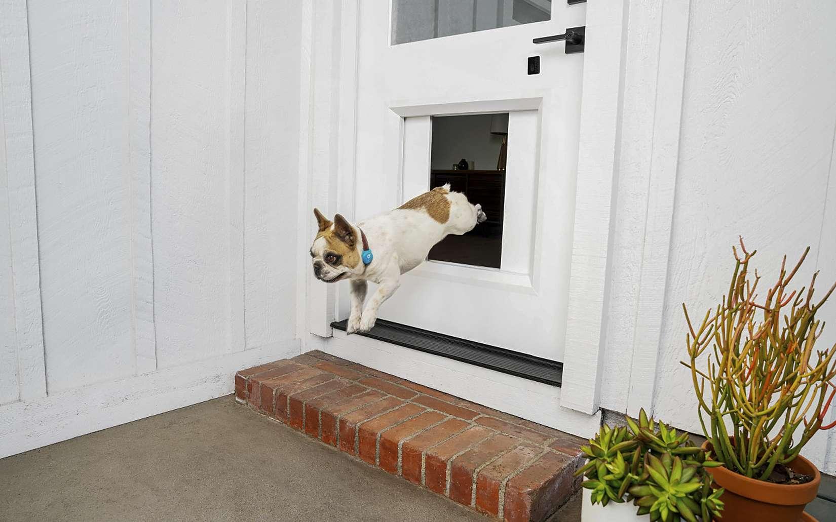 Le myQ Pet Portal permet à un chien de sortir dès qu'il en éprouve le besoin, où que soit son maître. © Courtesy of The Chamberlain Group, myQ Pet Portal