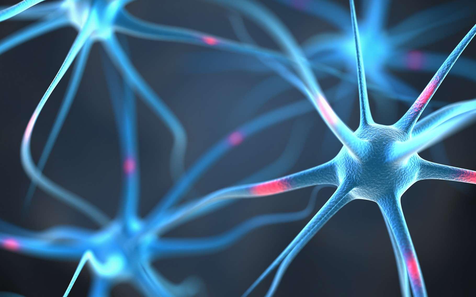 D'après l'hypothèse de l'homéostasie synaptique, le sommeil permet une mise en repos des connexions entre neurones, ce qui améliore les performances à l'éveil. © Leigh Prather, Shutterstock