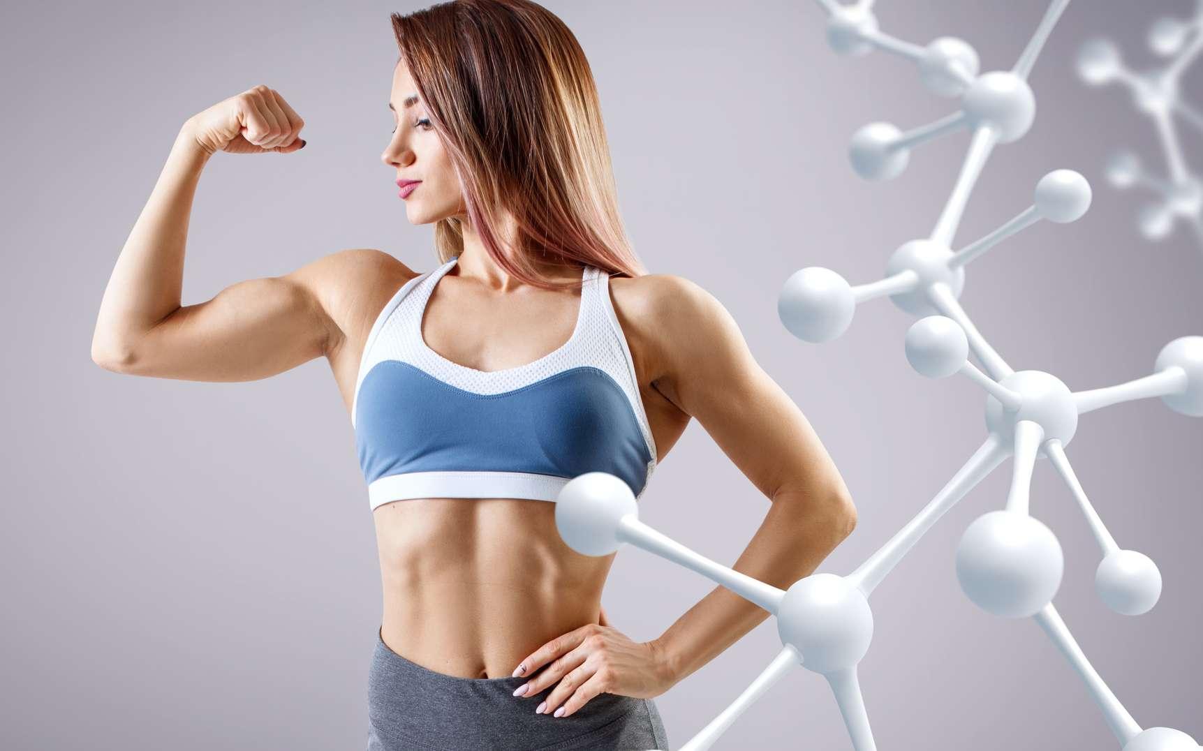 L'anabolisme contribue à la construction de la masse musculaire. © llhedgehogll, Fotolia