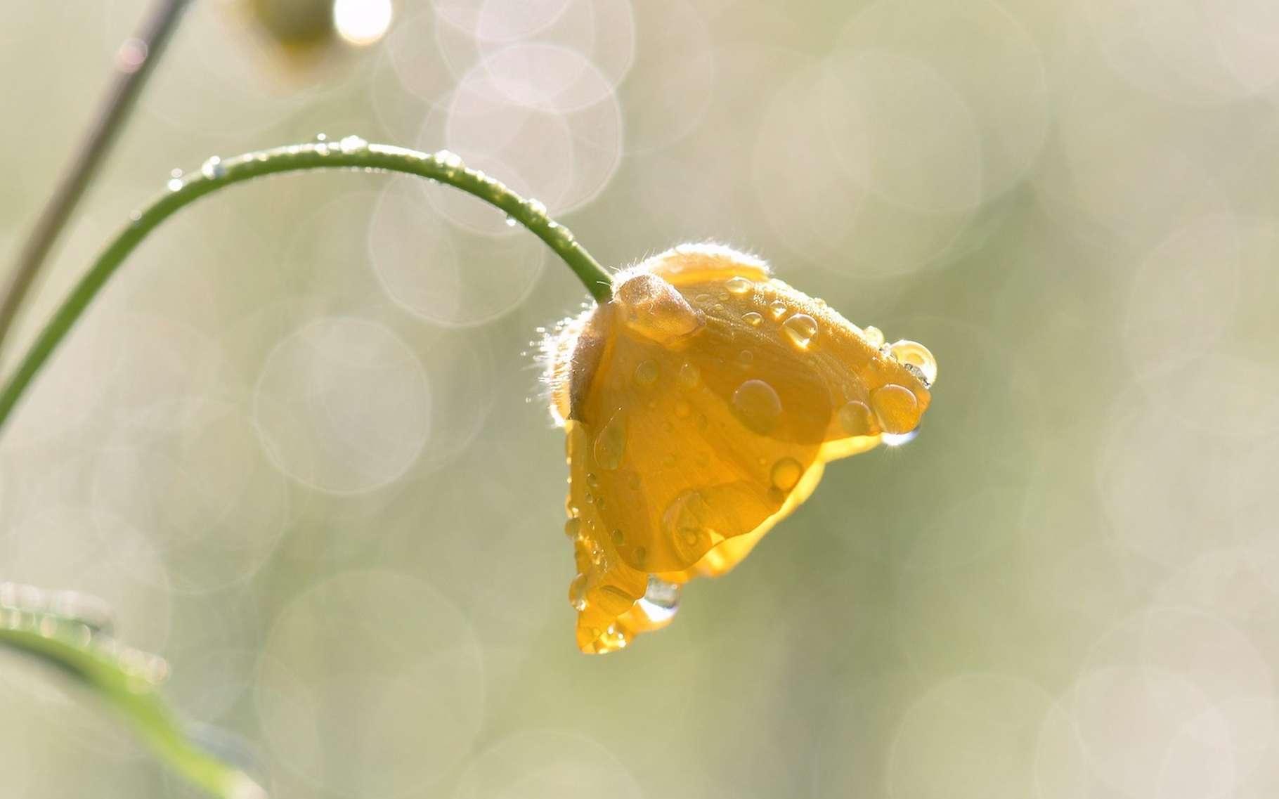 Comme les fleurs, le matériau mis au point par des chercheurs de la Tufts University bouge sous l'effet de la lumière. © Pitsch, Pixabay, CC0 Creative Commons