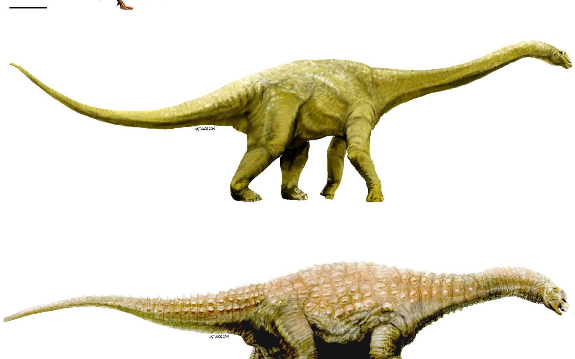 Une vision d'artiste des trois nouveaux dinosaures australiens. De bas en haut : Diamantinasaurus (Matilda, plutôt costaude), Wintonotitan (Clancy, plutôt gracile) et Australovenator (Banjo, rude prédateur). Les deux premiers annoncent les titanosaures (dont l'argentinosaure, avec ses 40 mètres de longueur) et le troisième les grands théropodes, comme T. rex. © T. Tischler, Australian Age of Dinosaurs Museum of Natural History