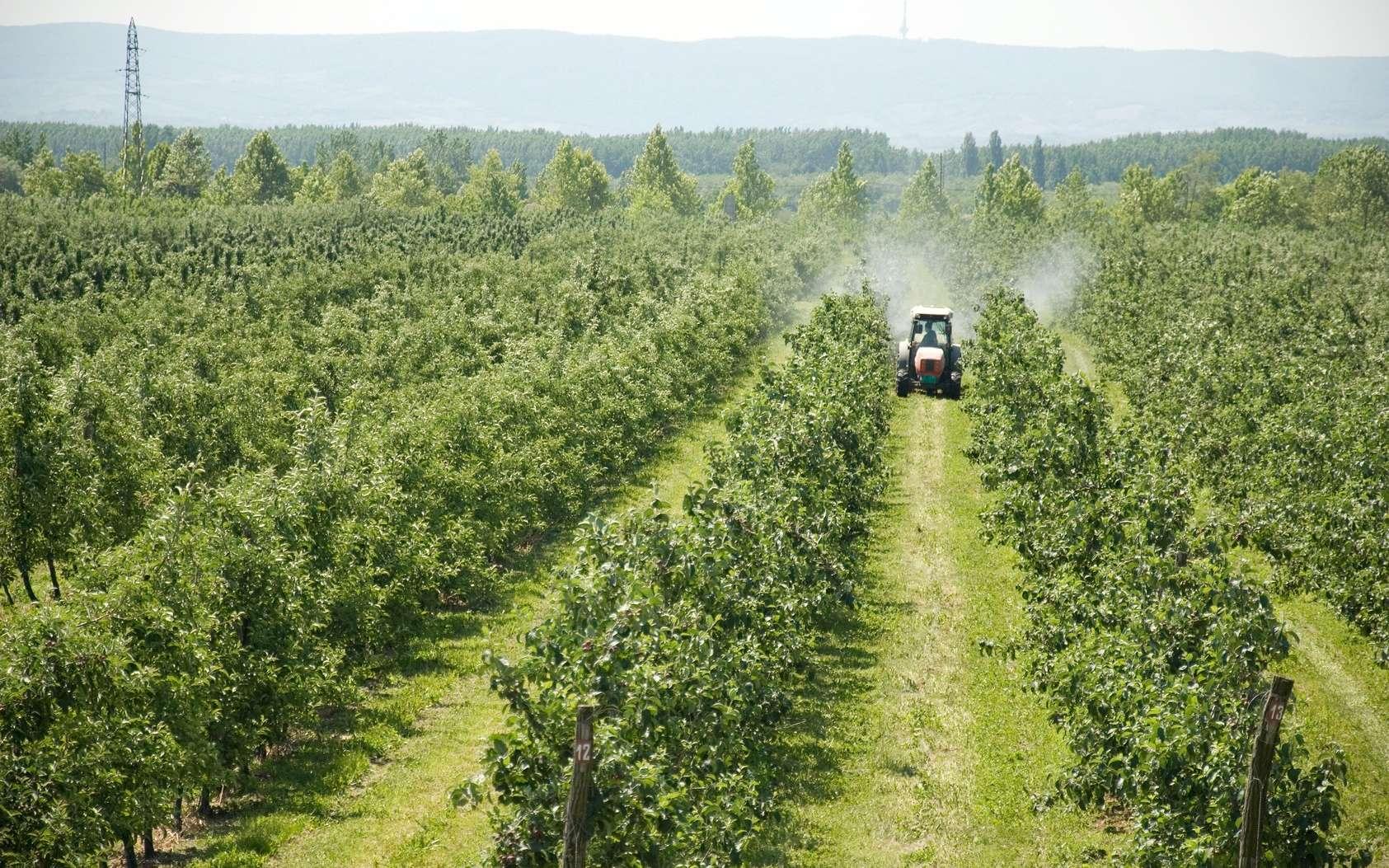 Les chercheurs ont identifié un mécanisme moléculaire expliquant pourquoi les pesticides favorisent Parkinson. © shoot4pleasure10, Fotolia