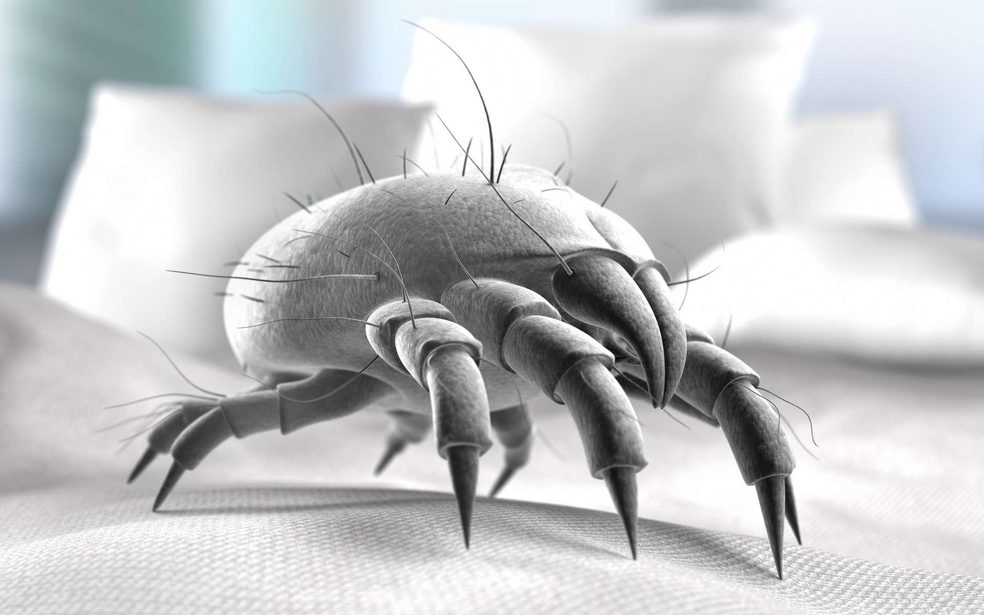 Les acariens vivent dans les endroits chauds et humides de la maison. © Peterschreiber.Media, Adobe Stock
