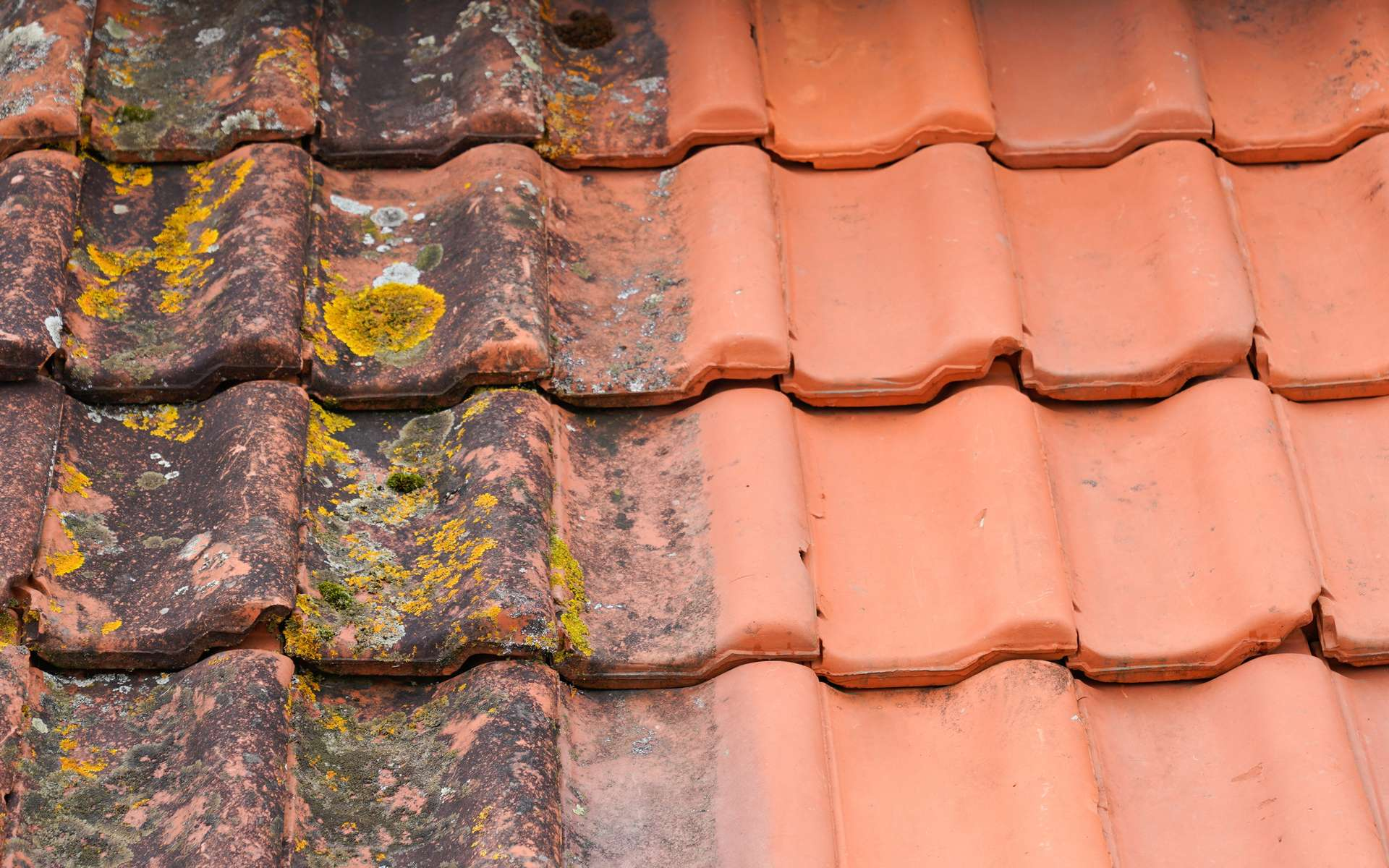 Pourquoi réaliser un démoussage de toiture ? © OceanProd, Adobe Stock