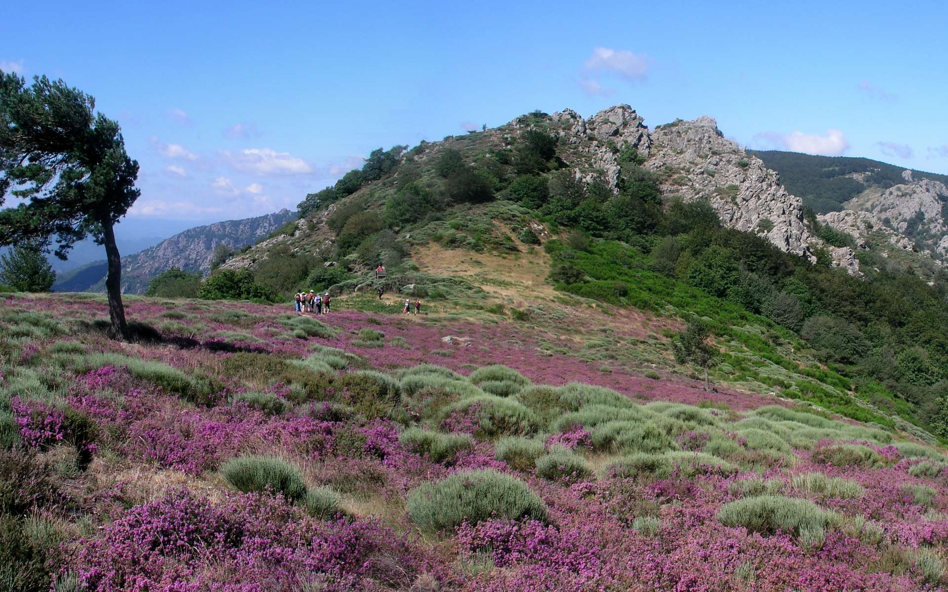 parc naturel regional du haut languedoc