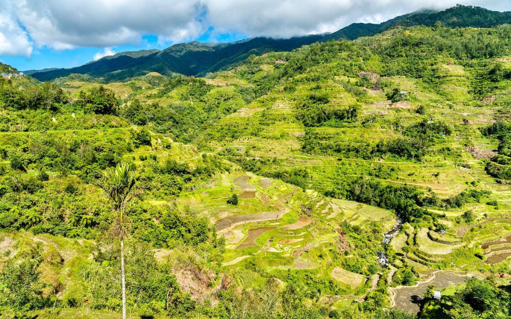 La découverte a eu lieu sur l'île de Luçon aux Philippines. © Leonid Andronov, Fotolia