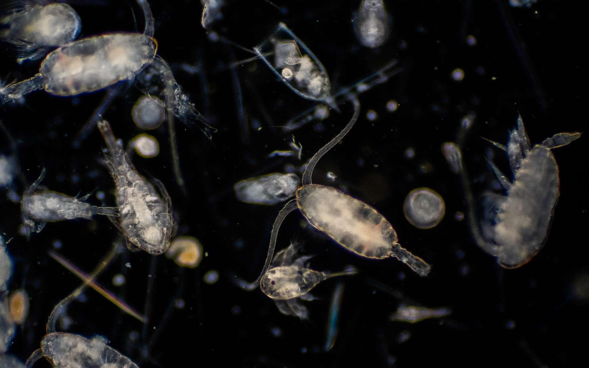 Les micro-organismes végétaux jouent un rôle fondamental dans le fonctionnement des écosystèmes marins. © tonaquatic, Adobe Stock