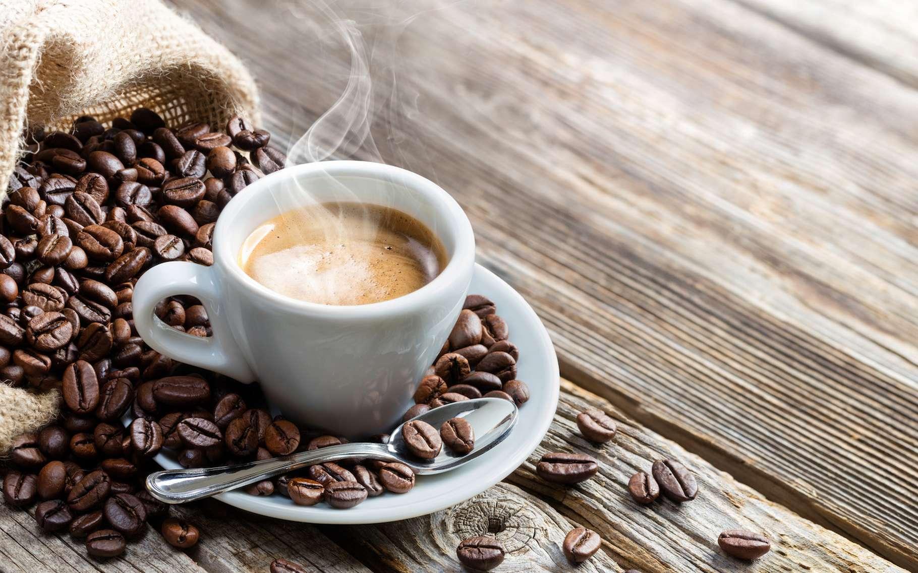 Selon une étude, 60 % des espèces de café sauvage seraient menacées d'extinction. © Romolo Tavani, Fotolia