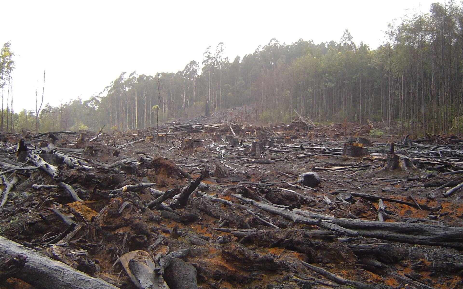 La déforestation menace la planète. Elle provoque des émissions de gaz à effet de serre et une perte significative de la biodiversité. © crustmania/Flickr