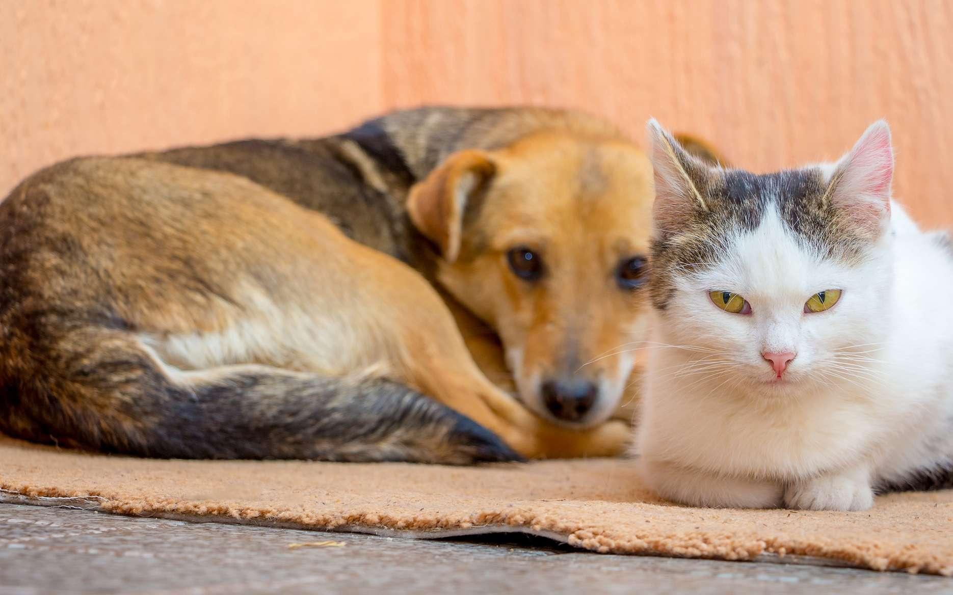 Certains antipuces pour chiens sont toxiques pour le chat. © Volodymyr, Fotolia