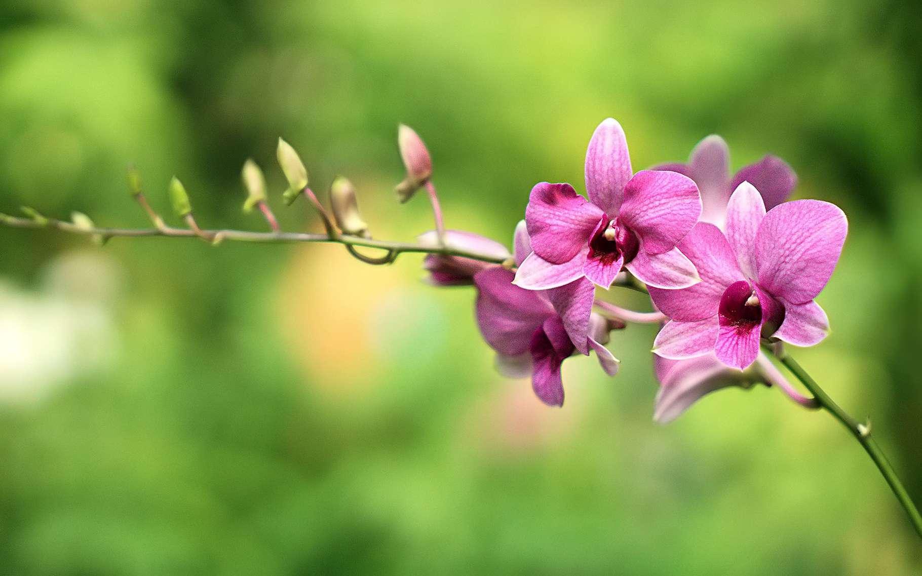 Faut Il Couper Les Lys Après Floraison fleurs fanées, bulbes à conserver   dossier