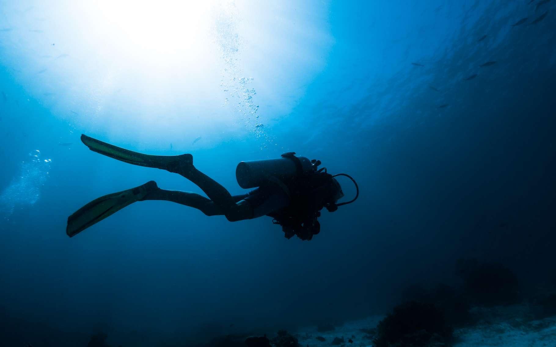 Des plongeurs du Groupement de recherches archéologiques du littoral languedocien ont découvert, par hasard, une forêt sous-marine au large de l'Hérault. © Dudarev Mikhail, Adobe Stock