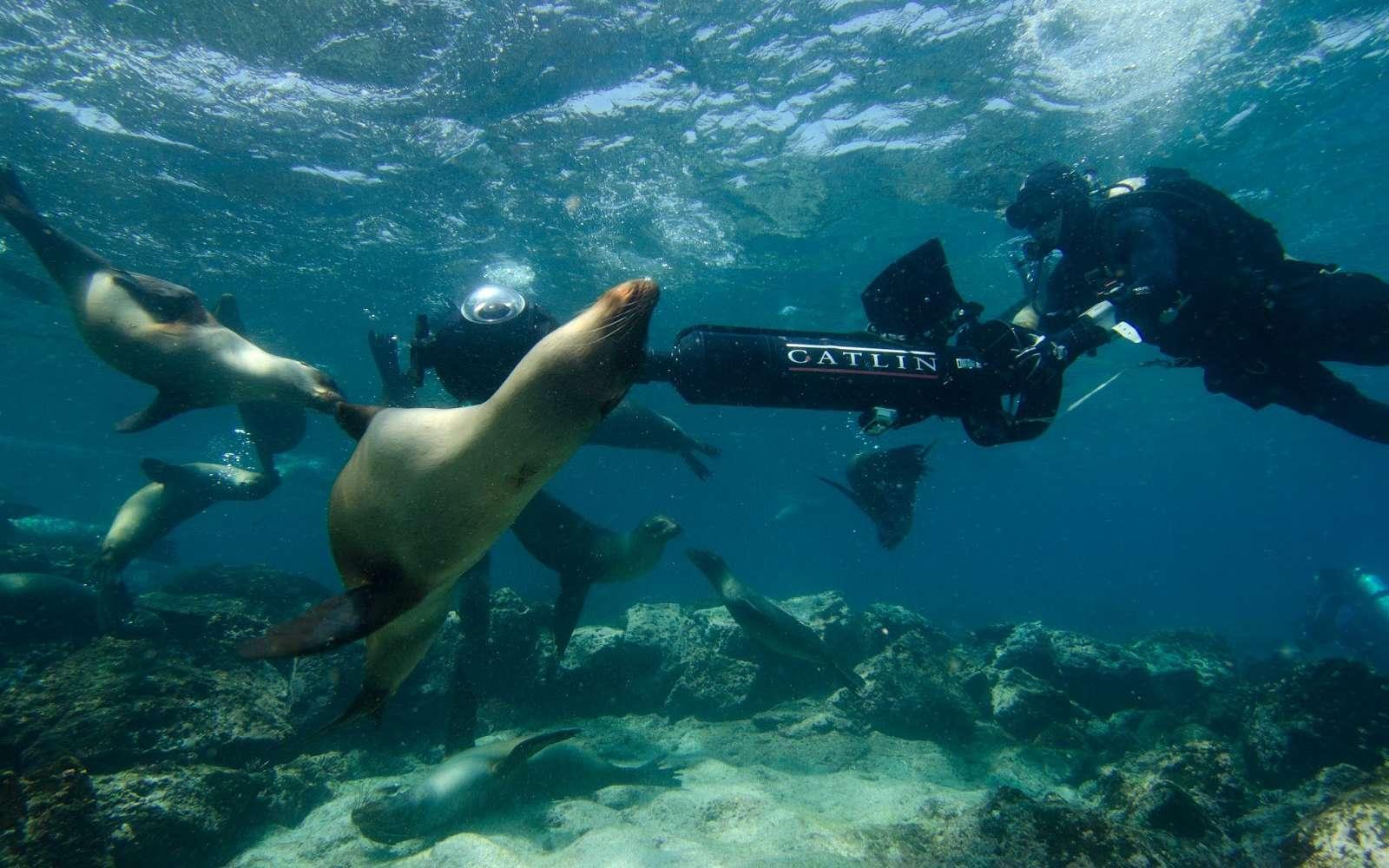 Christophe Bailhache pilote la caméra SVII autour d'un groupe d'otaries à l'île Champion des Galápagos. © Catlin Seaview Survey