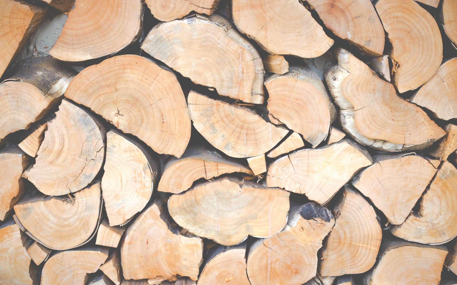 La lignine confère au bois sa rigidité et sa résistance mécanique. © Marion Michele, Unsplash