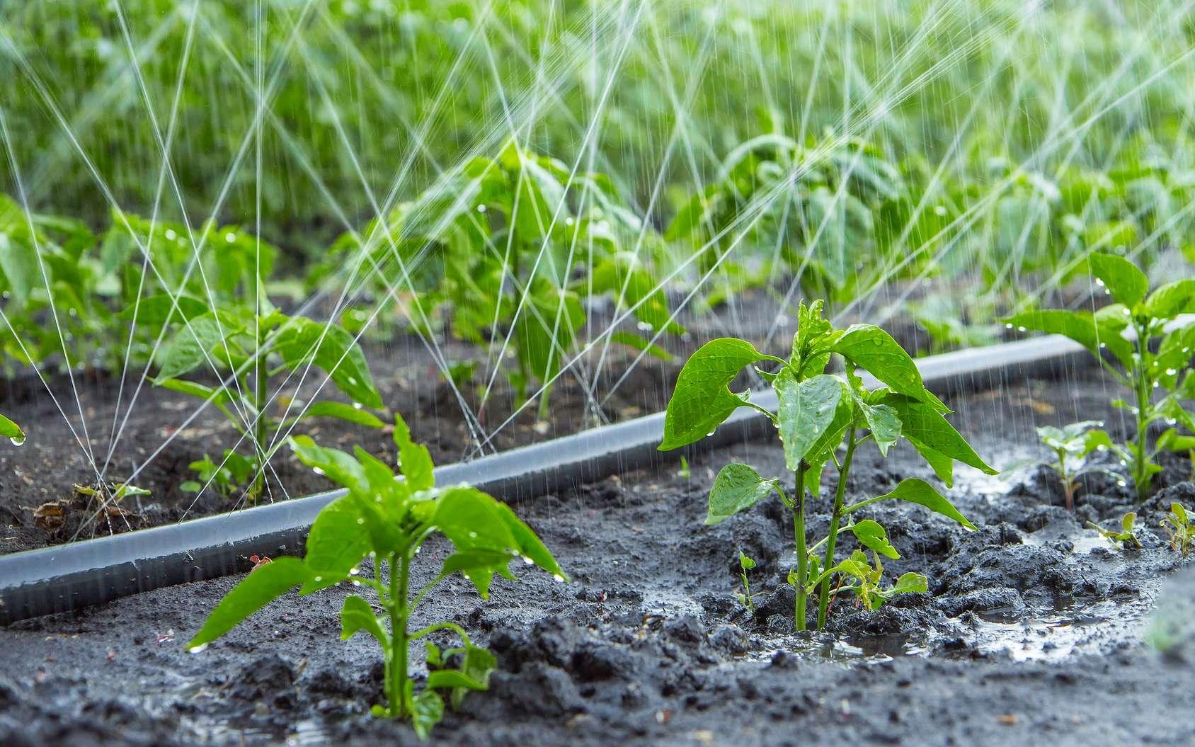 Un tuyau microporeux réduit la consommation d'eau. © Fotolia