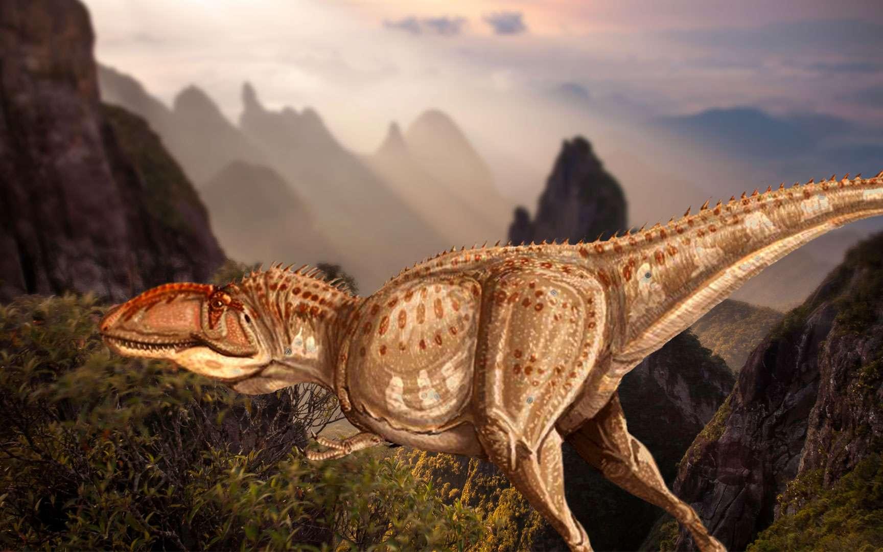 Giganotosaurus ou Giganotosaure, l'un des plus grands dinosaures. Signification : reptile géant. Ce dinosaure du Crétacé supérieur (-97 à -65 millions d'années) devait être l'un des plus grands dinosaures carnivores de tous les temps. Il devait mesurer entre 12 et 14 mètres et peser environ 7 à 8 tonnes. Ce monstre vivait en Argentine avec l'un des plus grands dinosaures : Argentinosaurus (peut-être 40 mètres de long et 90 tonnes). Giganotosaurus devait souvent se regrouper, à un moment de l'année (le départ des femelles pour aller pondre leurs œufs) afin de chasser. Ils essayaient alors d'isoler un vieux dinosaure, un malade ou un jeune membre du troupeau et de le tuer en le blessant. Parfois, Giganotosaurus pouvait attaquer seul des Iguanodons (dinosaure quadrupède et bipède de 9 mètres de long) dans les forêts clairsemées d'Argentine. Cet animal était probablement une machine à tuer, mais sa taille reste un sujet de discussion. © ДиБгд, Wikimedia Commons, DP