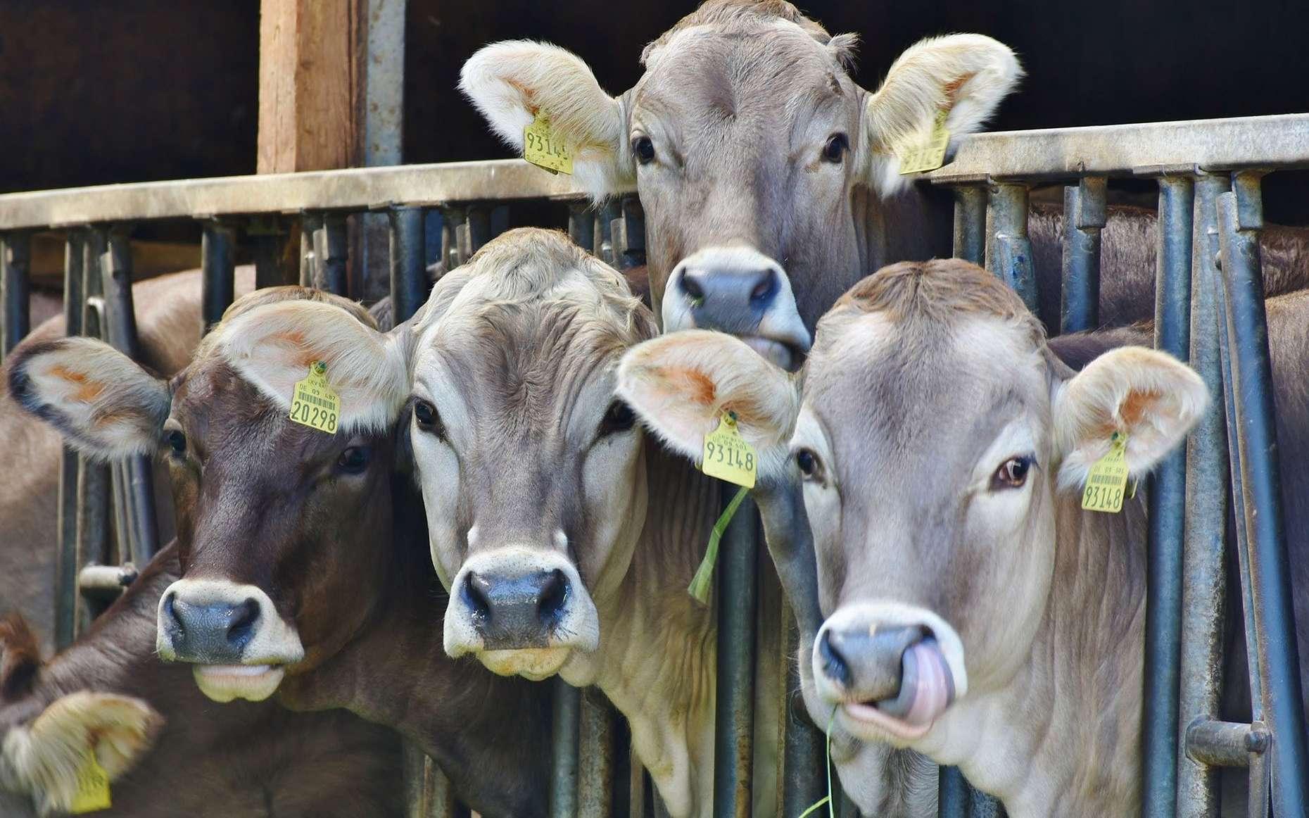 L'agriculture, cause du réchauffement climatique