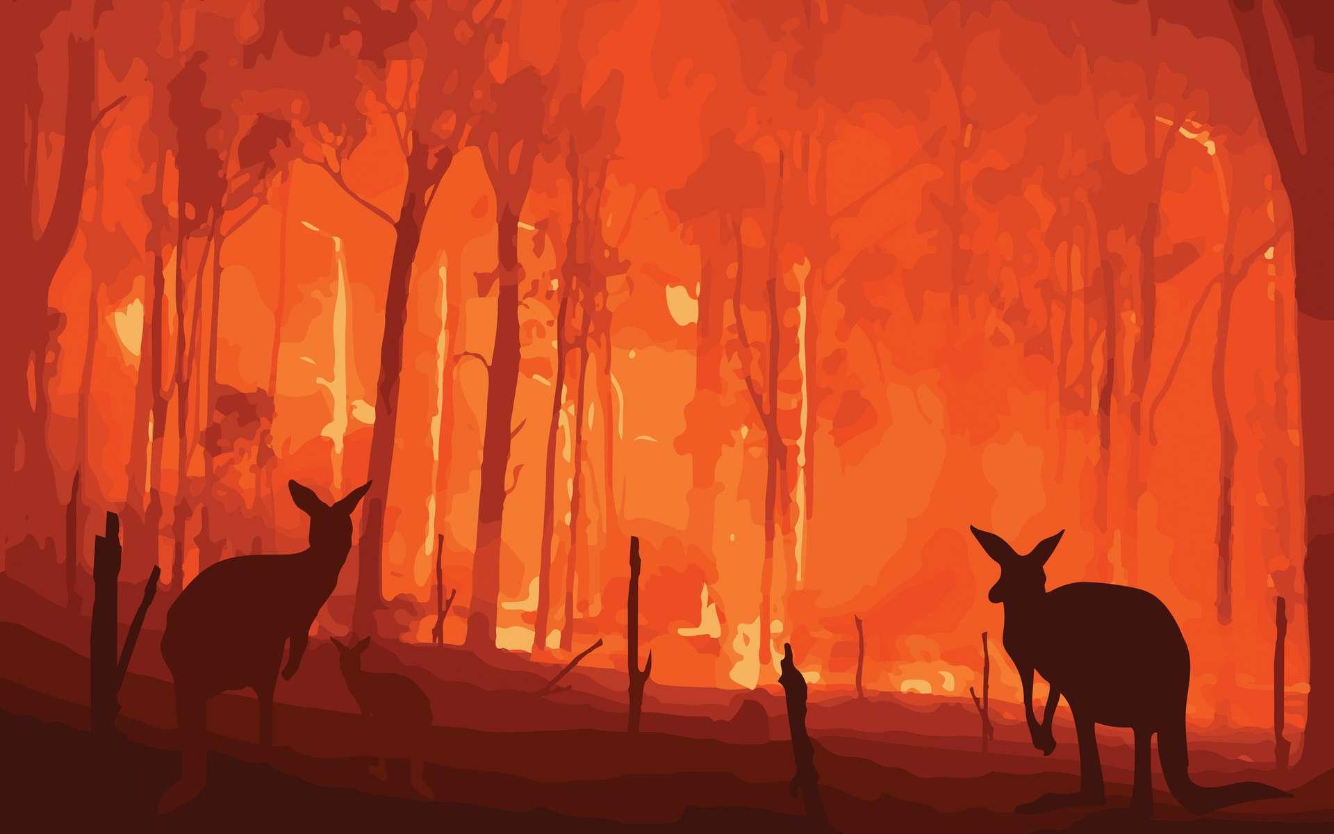Plus d'un milliard d'animaux ont péri dans les incendies qui ravagent l'Australie depuis le printemps austral 2019. © lllonajalll, Adobe Stock