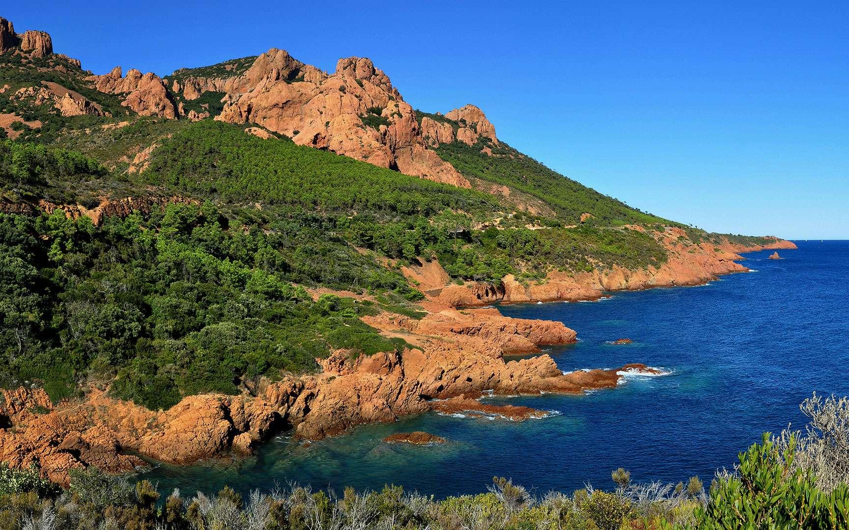 La posidonie, le jardin de la Méditerranée. La posidonie, ou Posidonia oceanica, tire son nom de Poséidon, dieu grec de la mer. Elle pousse sur les fonds entre la surface et 40 m de profondeur, et forme de vastes herbiers qui constituent l'écosystème majeur de la Méditerranée. Ces herbiers sont un lieu de frai et de « nurserie » pour de nombreuses espèces animales, et représentent une source de nourriture pour d'autres. La posidonie permet aussi de fixer les fonds marins grâce à l'entrelacement de ses rhizomes. Ceux-ci s'empilent d'une année sur l'autre, et contribuent à augmenter progressivement le niveau du fond (environ un mètre par siècle). Malheureusement, cette plante est aujourd'hui menacée par la pollution des rivages. © Nicolas Barraqué