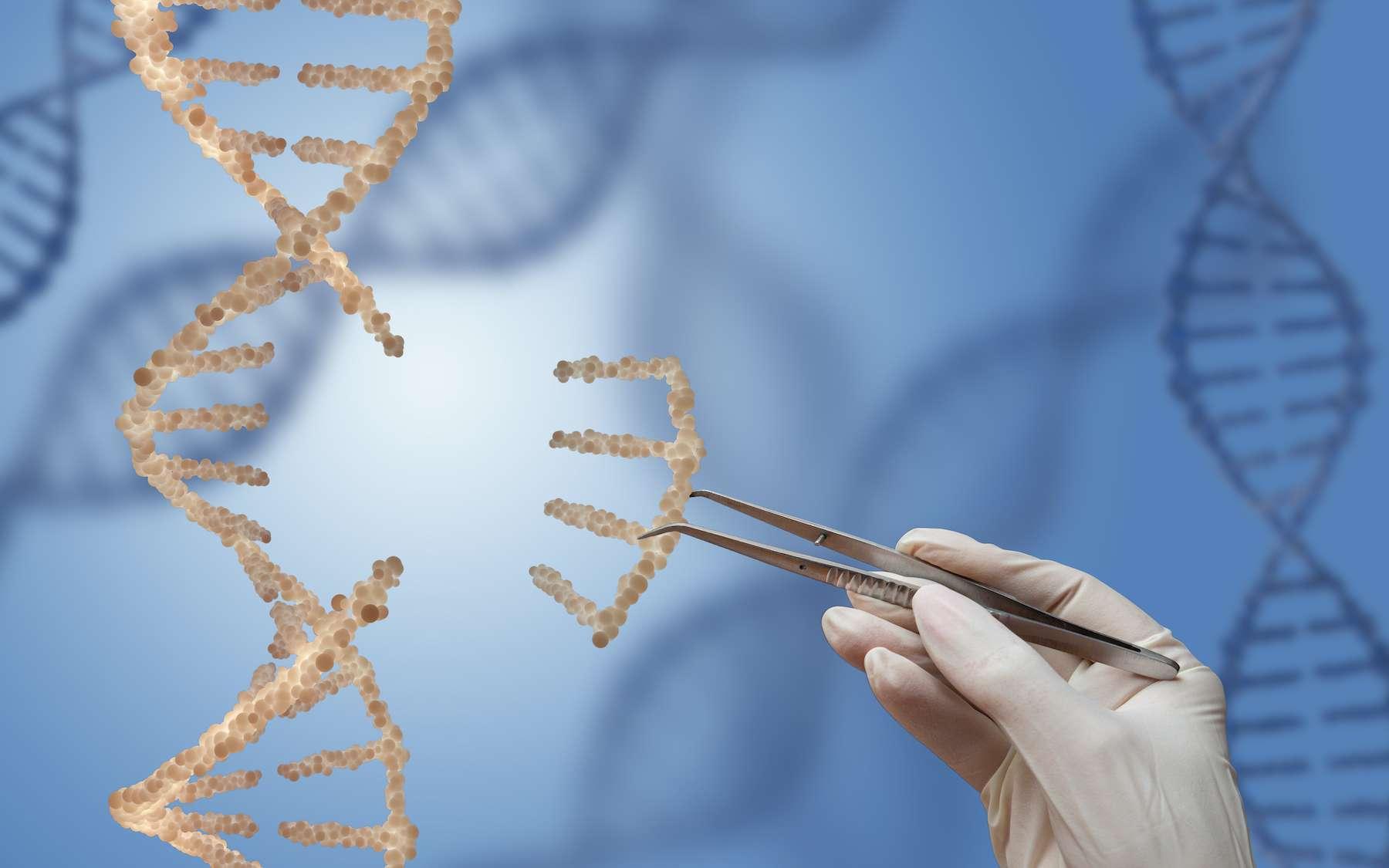 CRISPR est une technique qui permet de supprimer un gène ; elle dérive d'un système naturel de défense des bactéries contre les bactériophages. © rommma, Adobe Stock