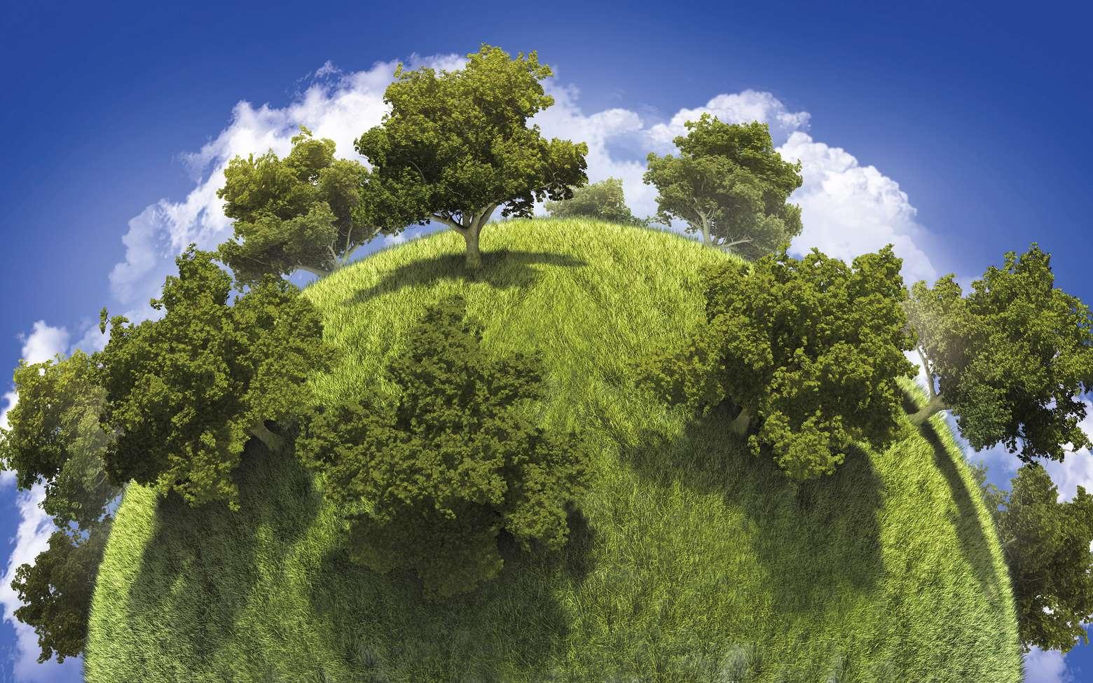 La Terre pourrait accueillir 1.000 milliards d'arbres supplémentaires. © kongvector, Fotolia