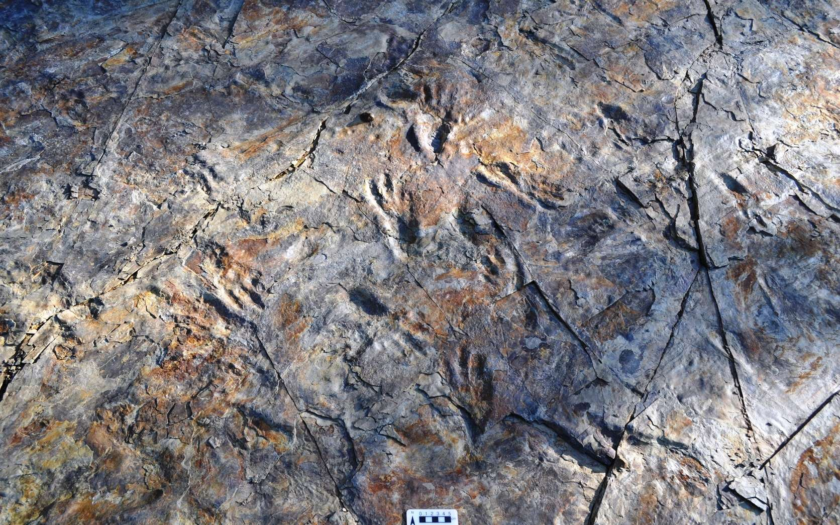 La piste montrant les traces de pas de crocodiles bipèdes du Crétacé sur le site de Sacheon Jahye en Corée du Sud. © Seul Mi Bae
