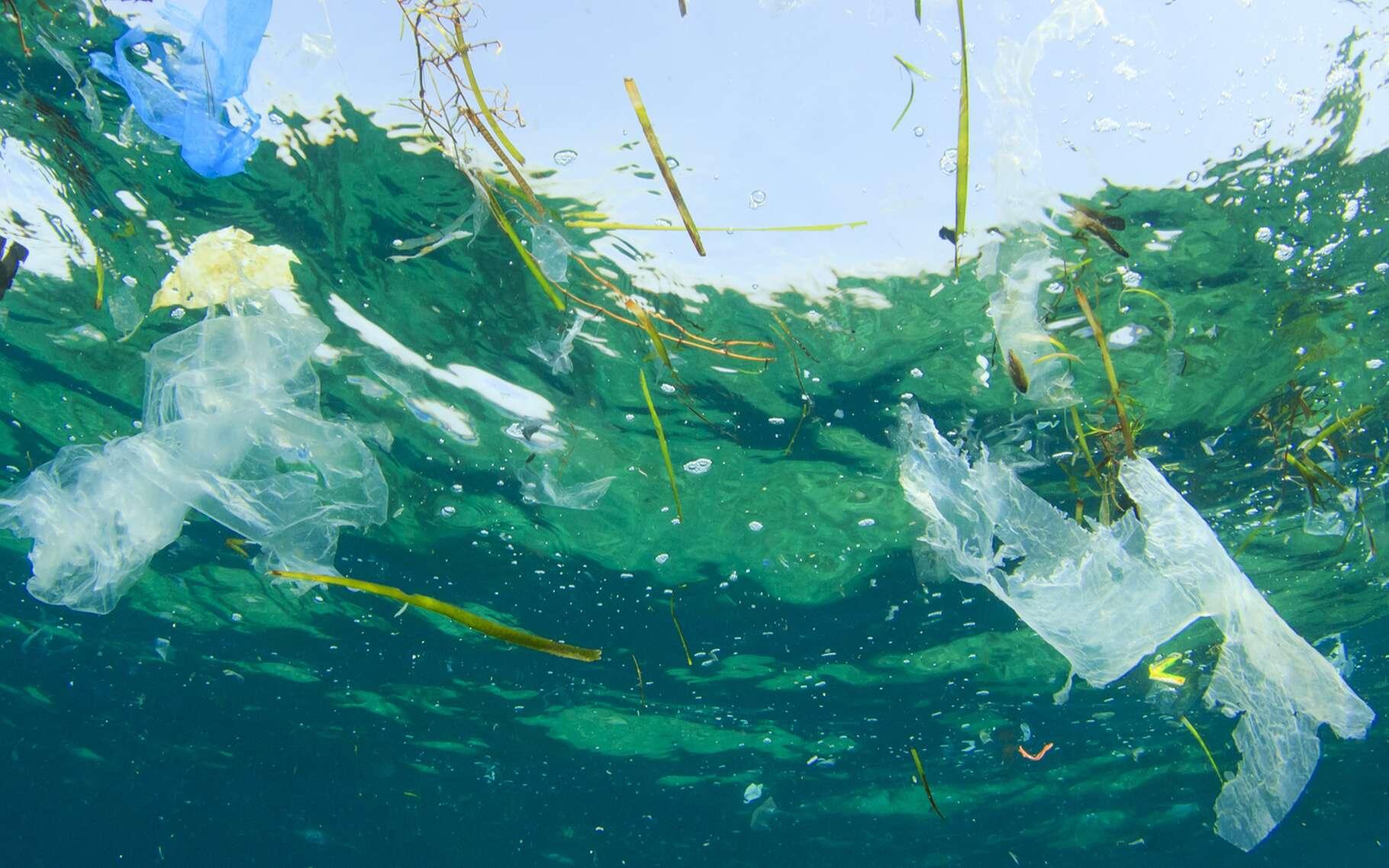 Au cœur des gyres, on observe une accumulation de déchets, en plastique notamment. © Rich Carey, Shutterstock