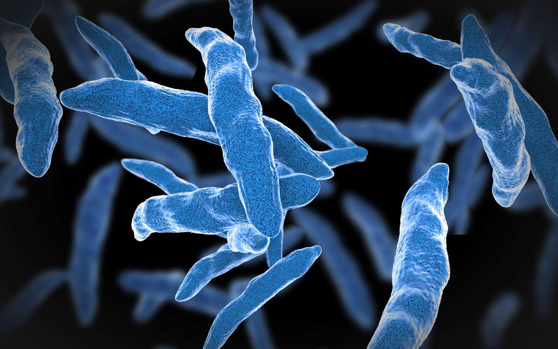 Illustration en 3D de Mycobacterium tuberculosis. © Giovanni Cancemi, Adobe Stock