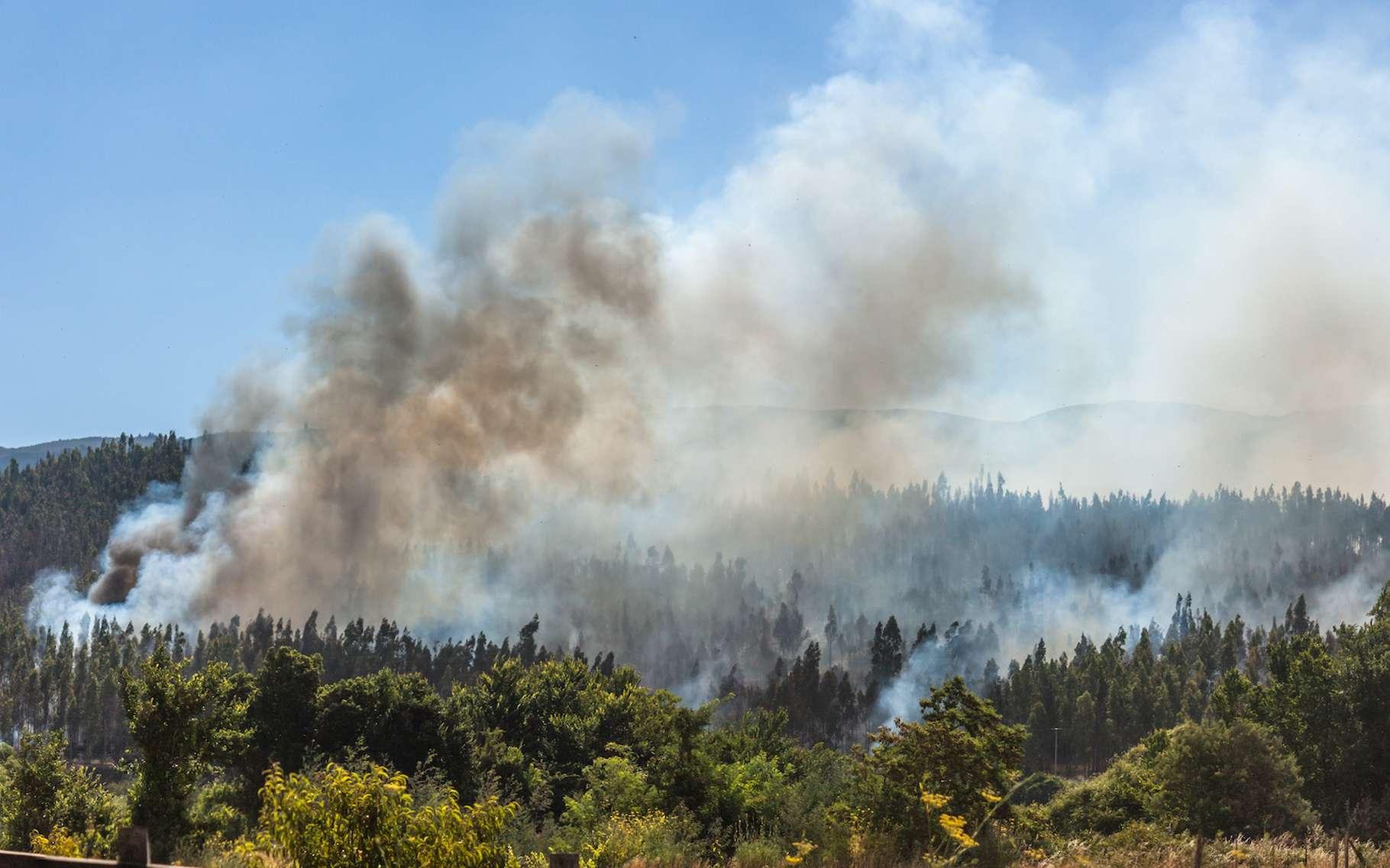Des chercheurs du NorthWest Research Associates (États-Unis) ont étudié l'effet des fumées issues des feux de forêt sur les nuages et la formation des pluies. © Natalia, Adobe Stock