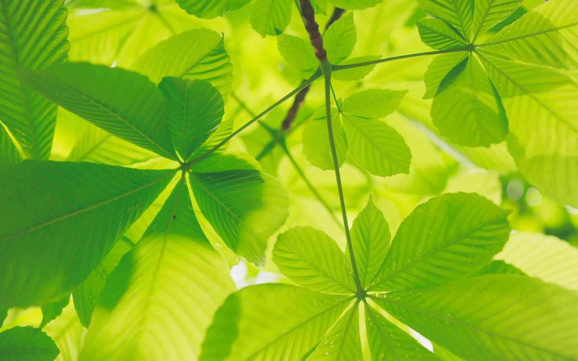 Réchauffement et CO2 : bon ou mauvais pour les plantes ? © Kumiko Shimizu, Unsplash