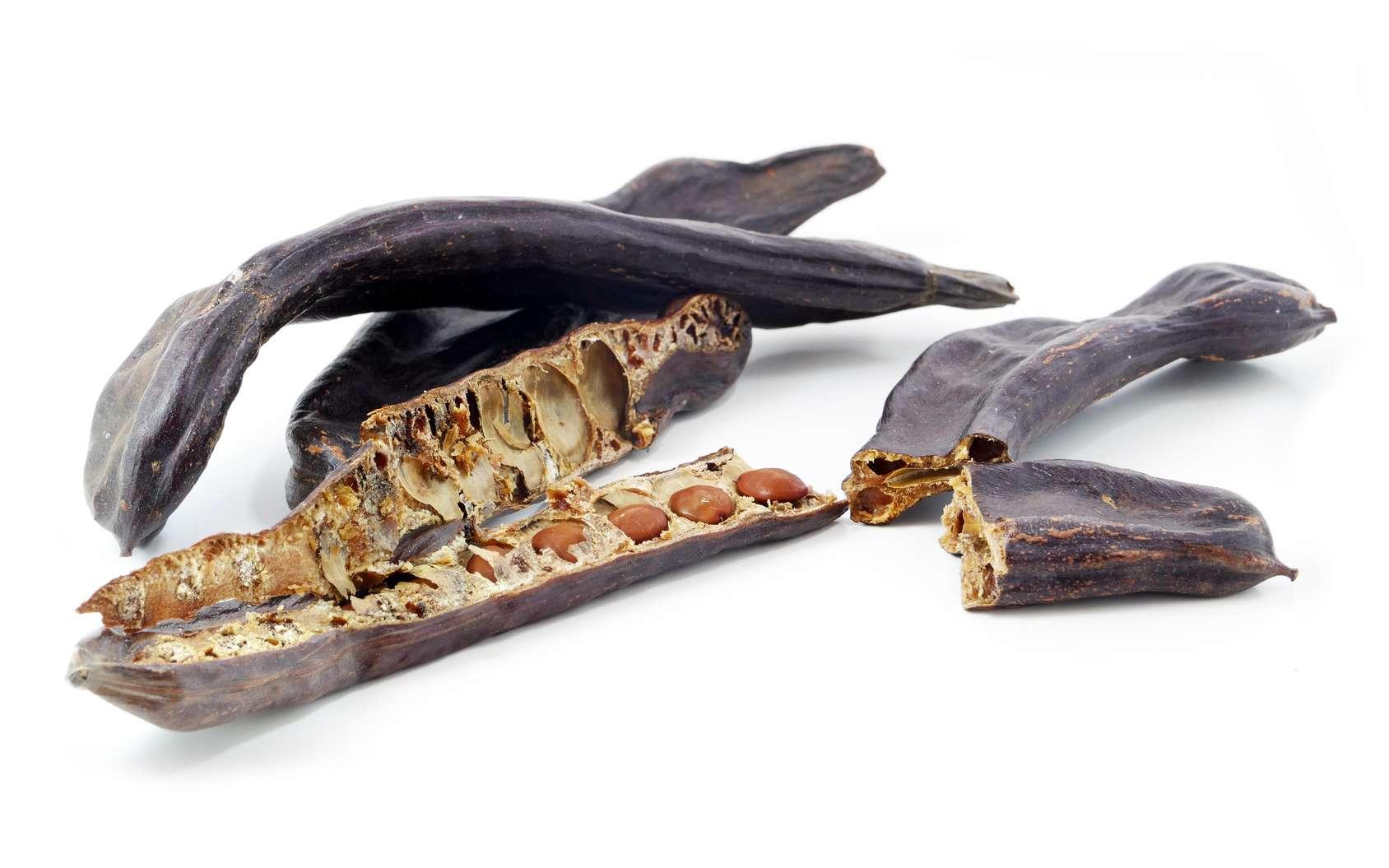Le caroubier, dont la graine est pleine de vertus santé, est originaire des pays méditerranéens. © Maren Winter, Fotolia