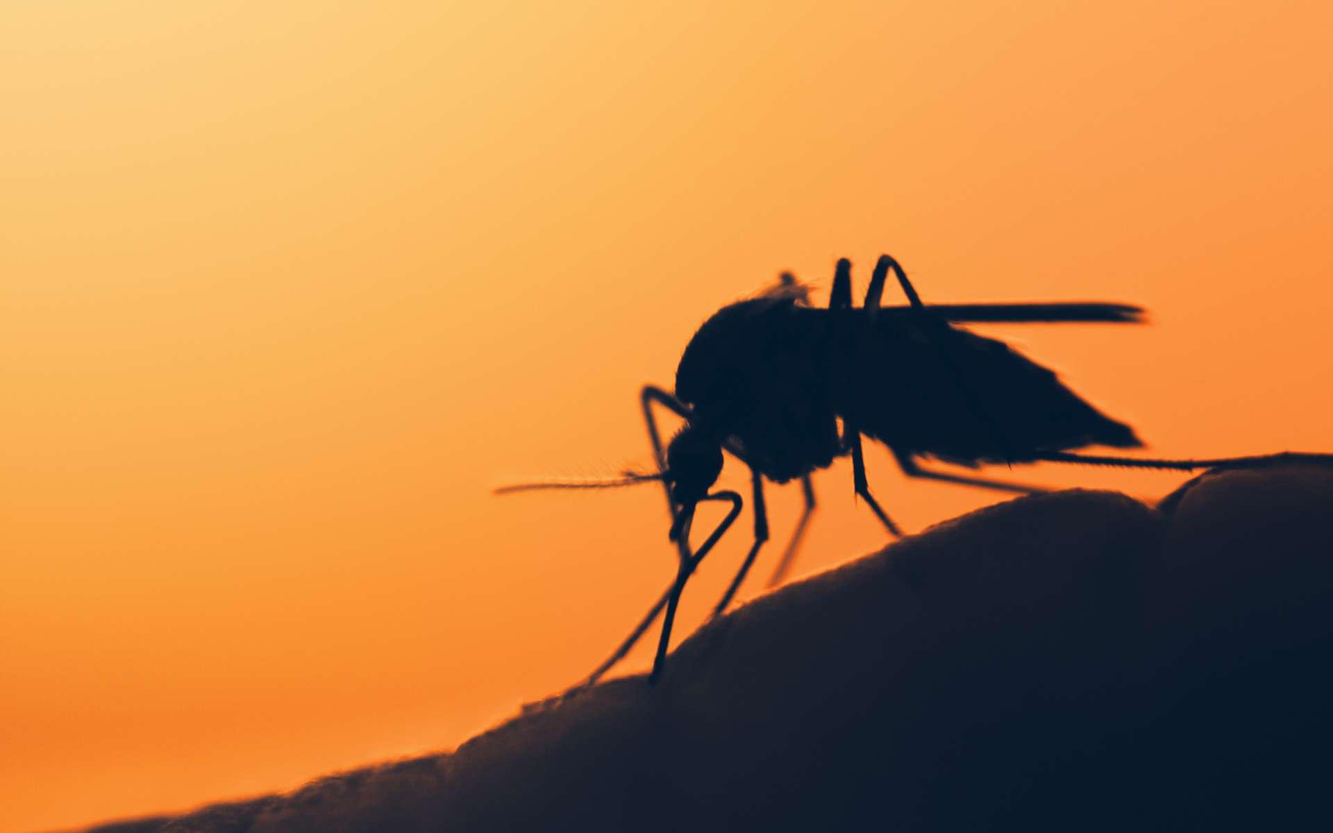 Un moustique sur la peau humaine. © mycterian, Adobe Stock
