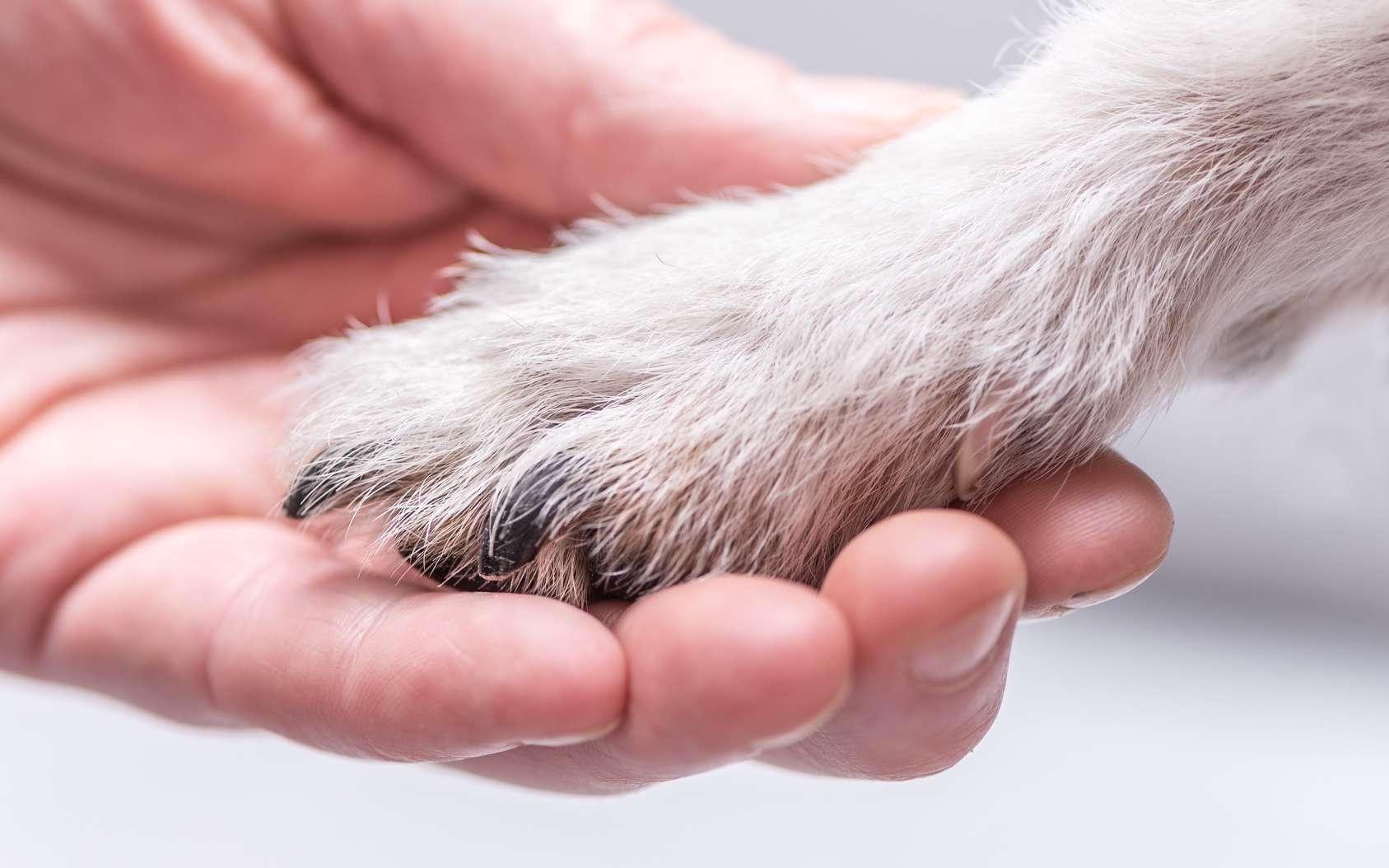 Une relation très forte unit l'Homme et le chien, probablement parce qu'ils ont un cerveau bien conçu pour que ces deux espèces se comprennent bien oralement. © K. Thalhofer, Fotolia