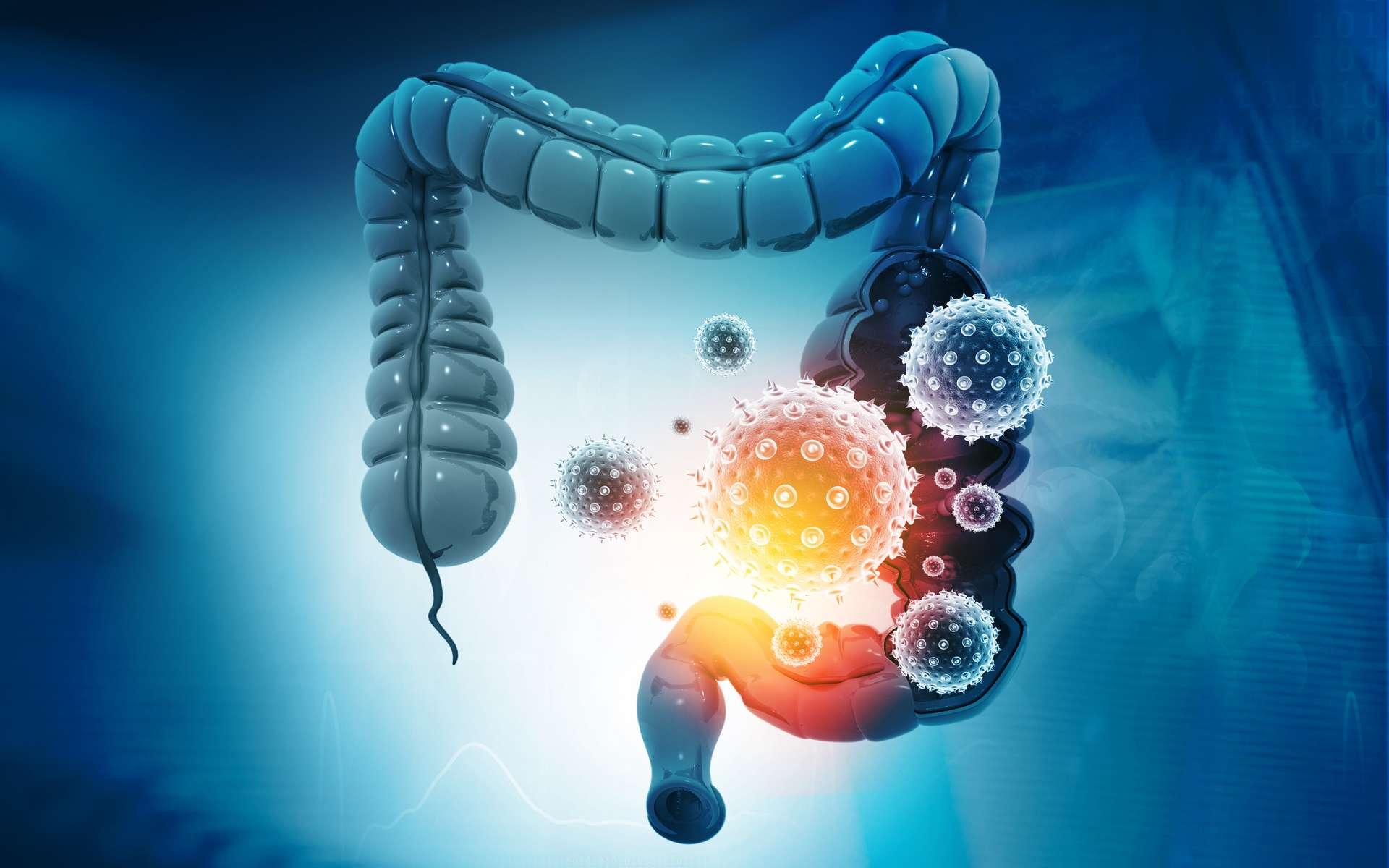 Le SARS-CoV-2 s'attaque aussi aux intestins. © Rasi, Adobe Stock