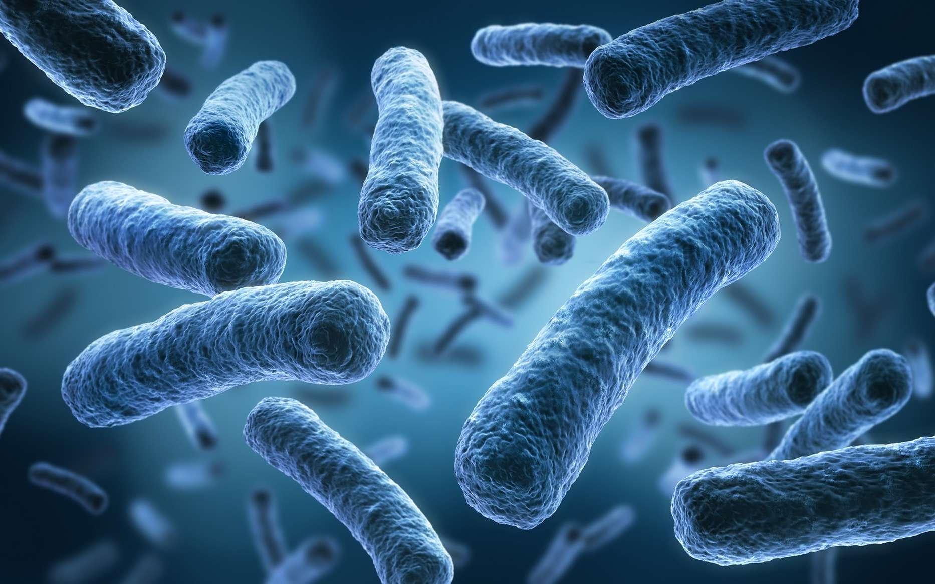 Les bactéries changeraient de forme pour se protéger des antibiotiques. © Fotolia