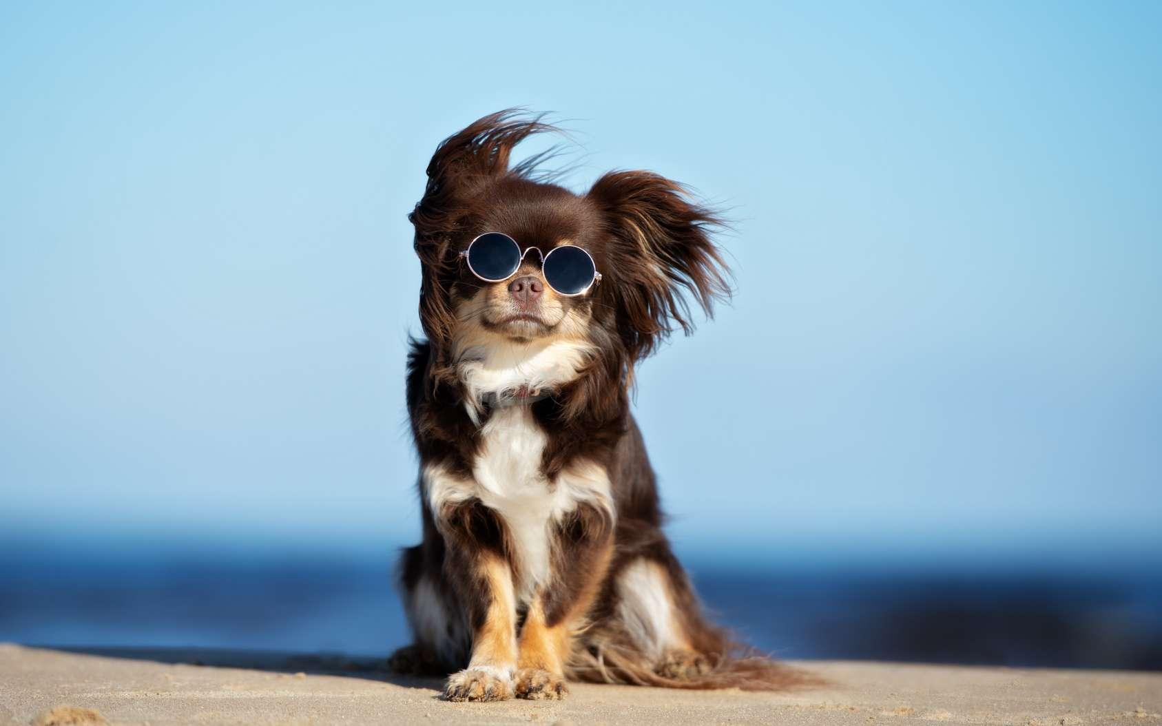Chats et chiens risquent autant que nous les coups de soleil. © otsphoto, Fotolia
