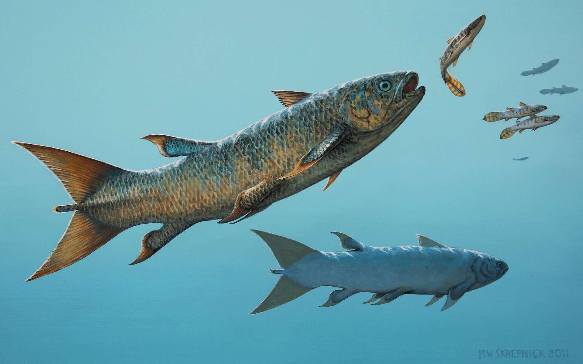 Le cœlacanthe Rebellatrix divaricerca devait chasser de petits poissons en pleine eau, au sein de l'océan à l'ouest de la Pangée, durant le Trias. © Michael Skrepnick