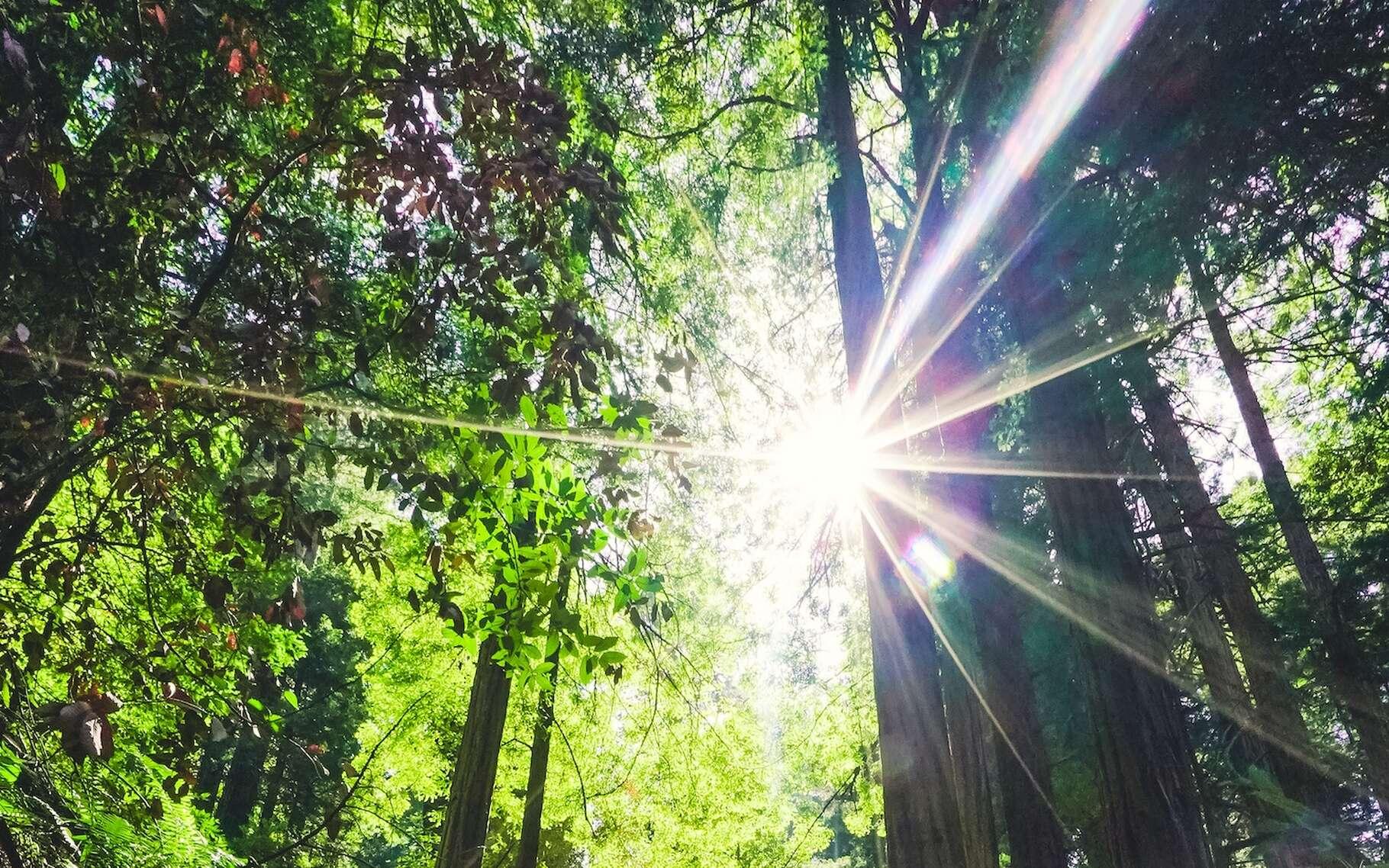 La chaleur du Soleil nous est transmise par rayonnement. Mais ce n'est pas le seul mode de transmission possible. © Eric Ward, Unsplash