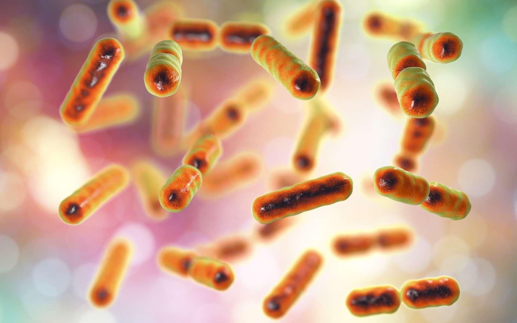 Des chercheurs de l'université d'État de l'Oregon (États-Unis) ont réalisé un progrès important dans la compréhension des rôles des bactéries intestinales dans la santé humaine. © Kateryna_Kon, Fotolia